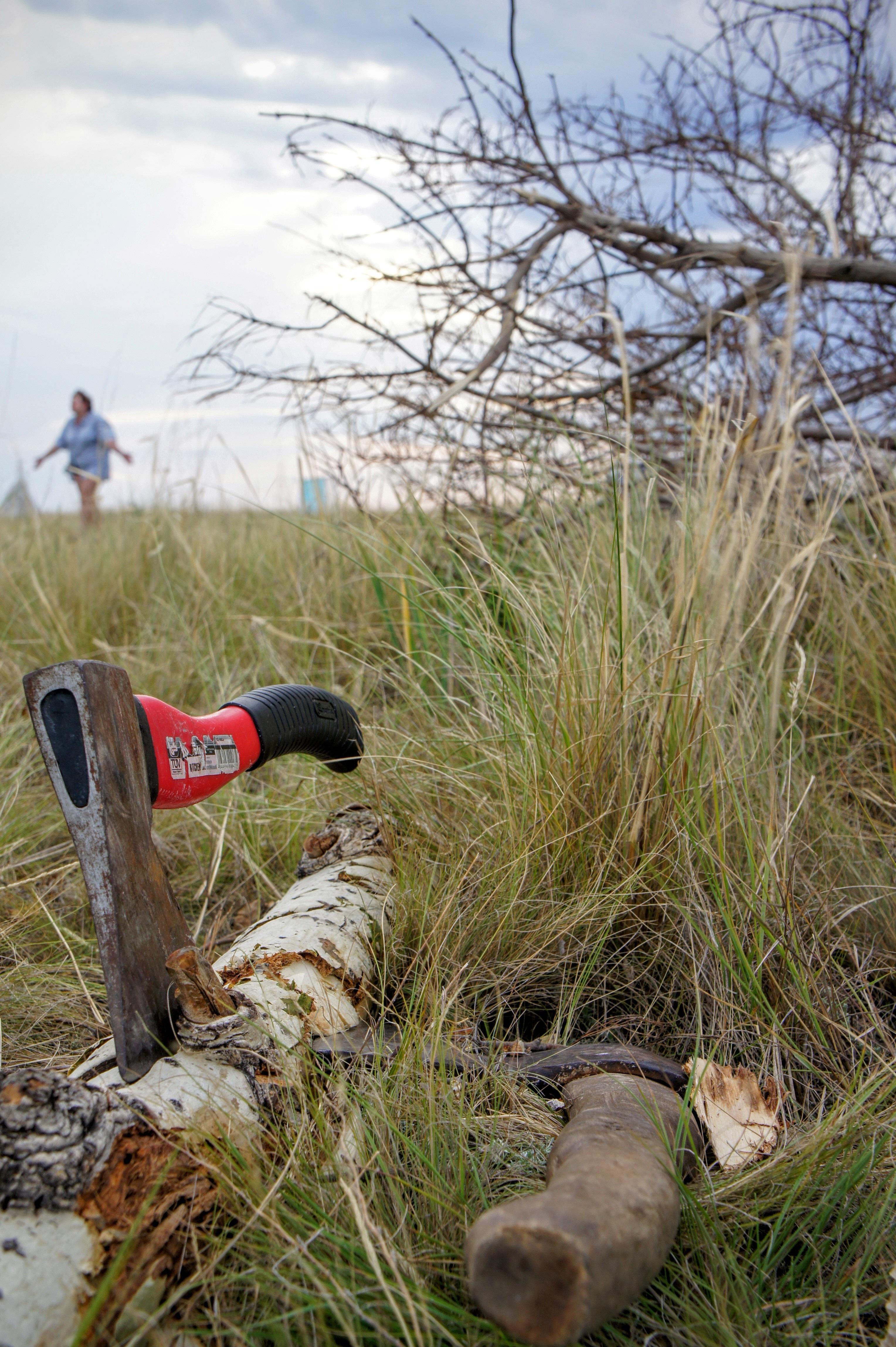 kostenlose foto : gras, wildnis, prärie, tierwelt, log, axt