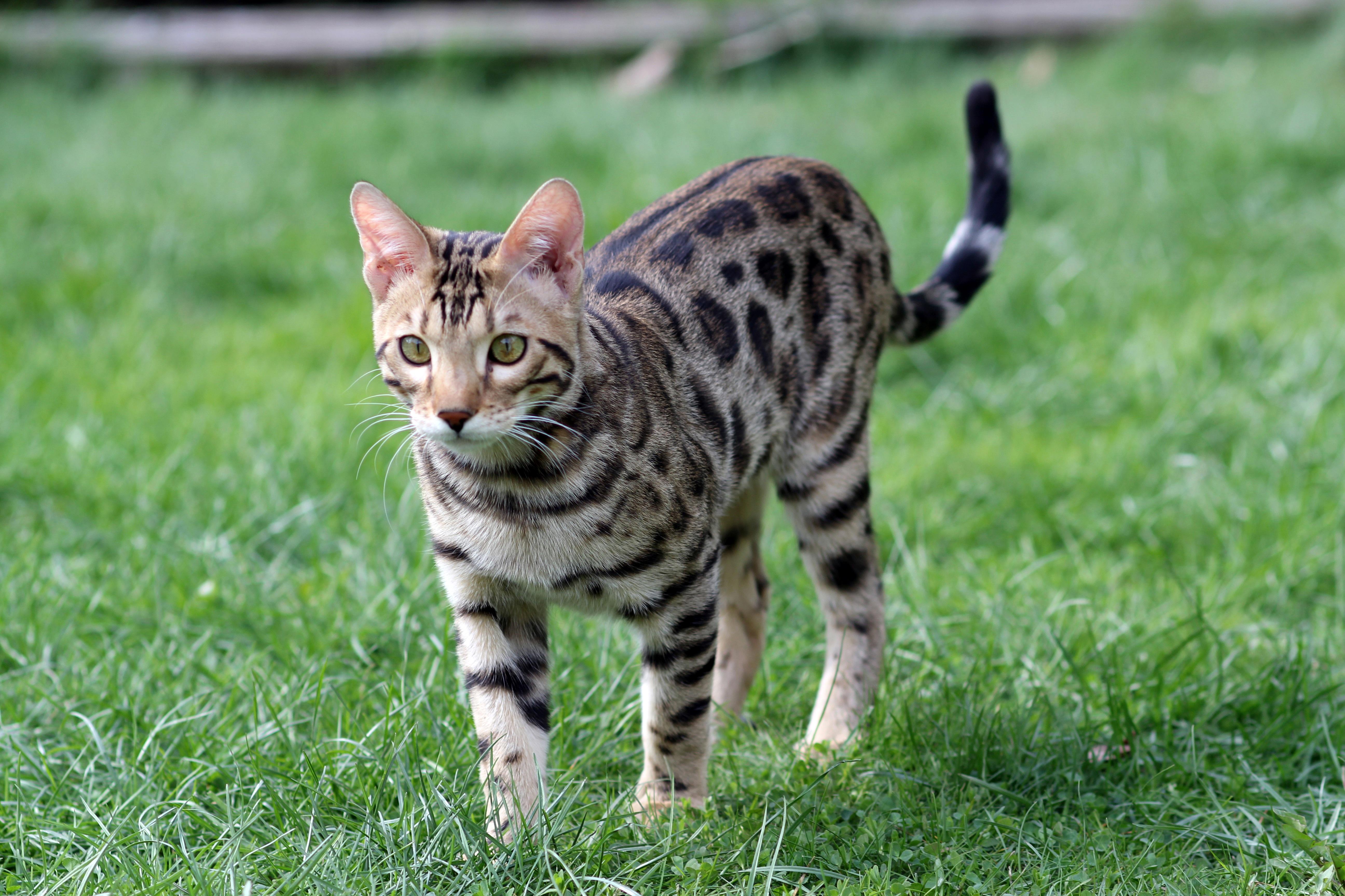 unique cat fur patterns