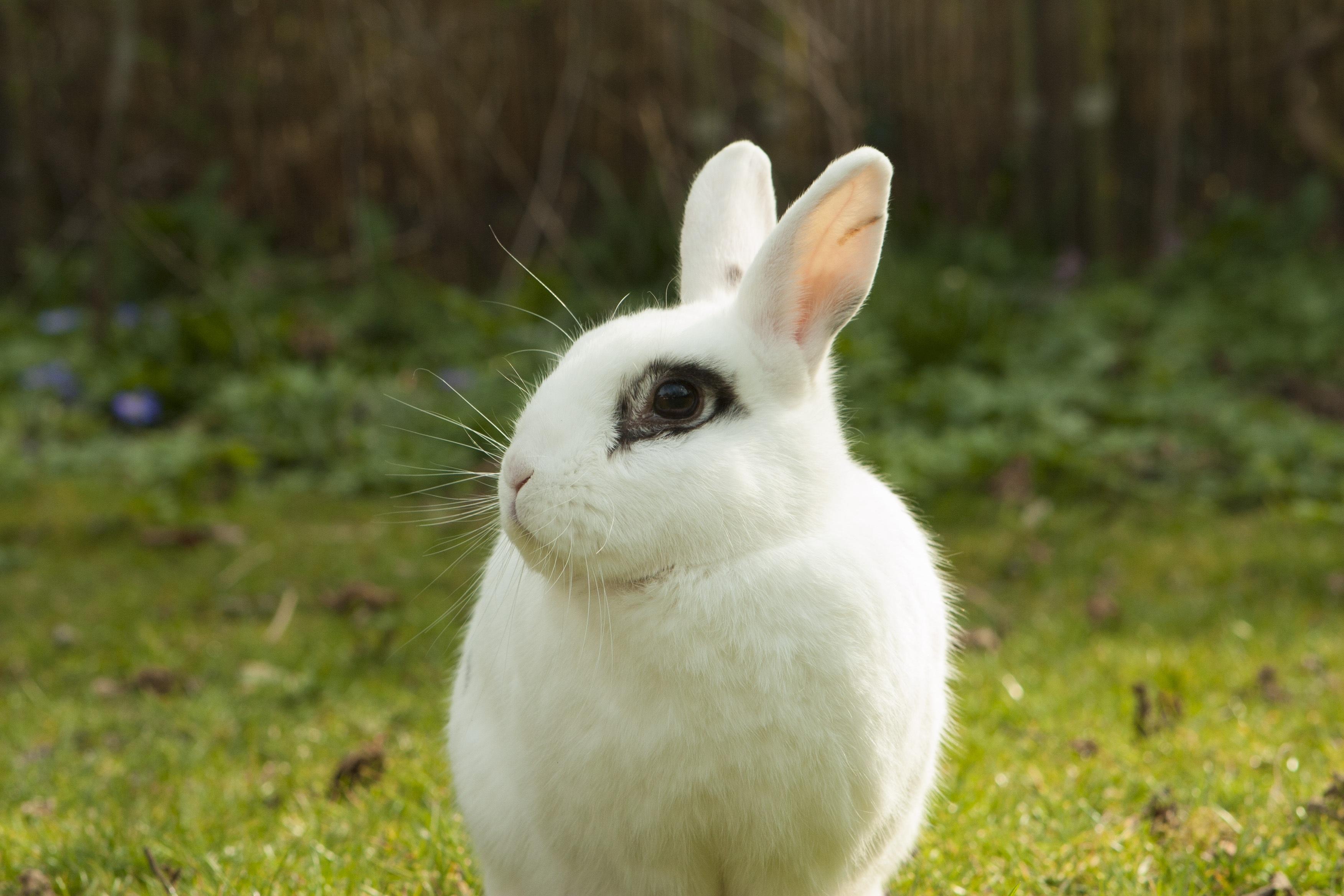 Кролики картинки фото, смешные
