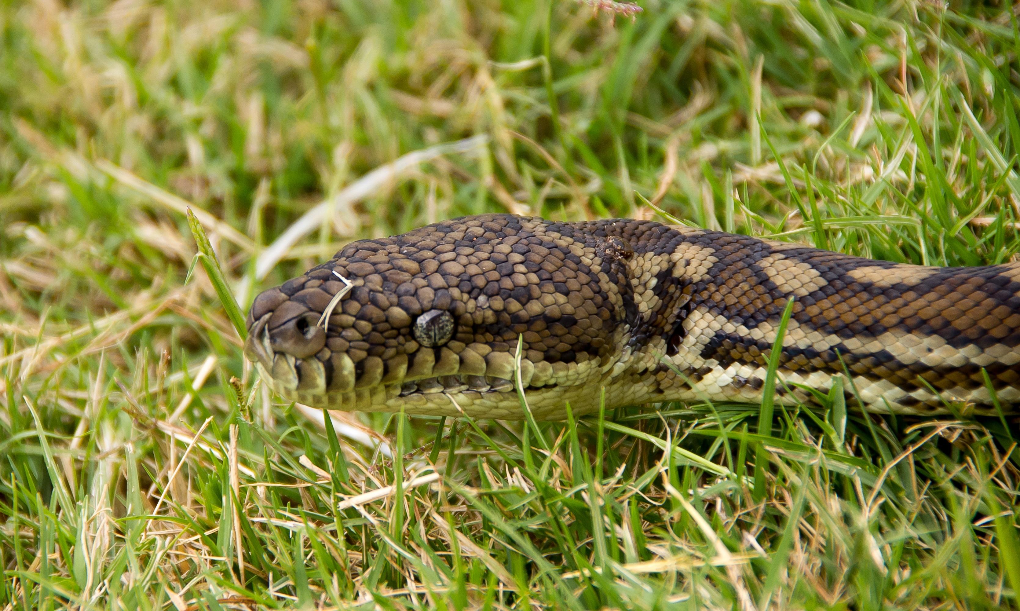 Покажите фото змей диких