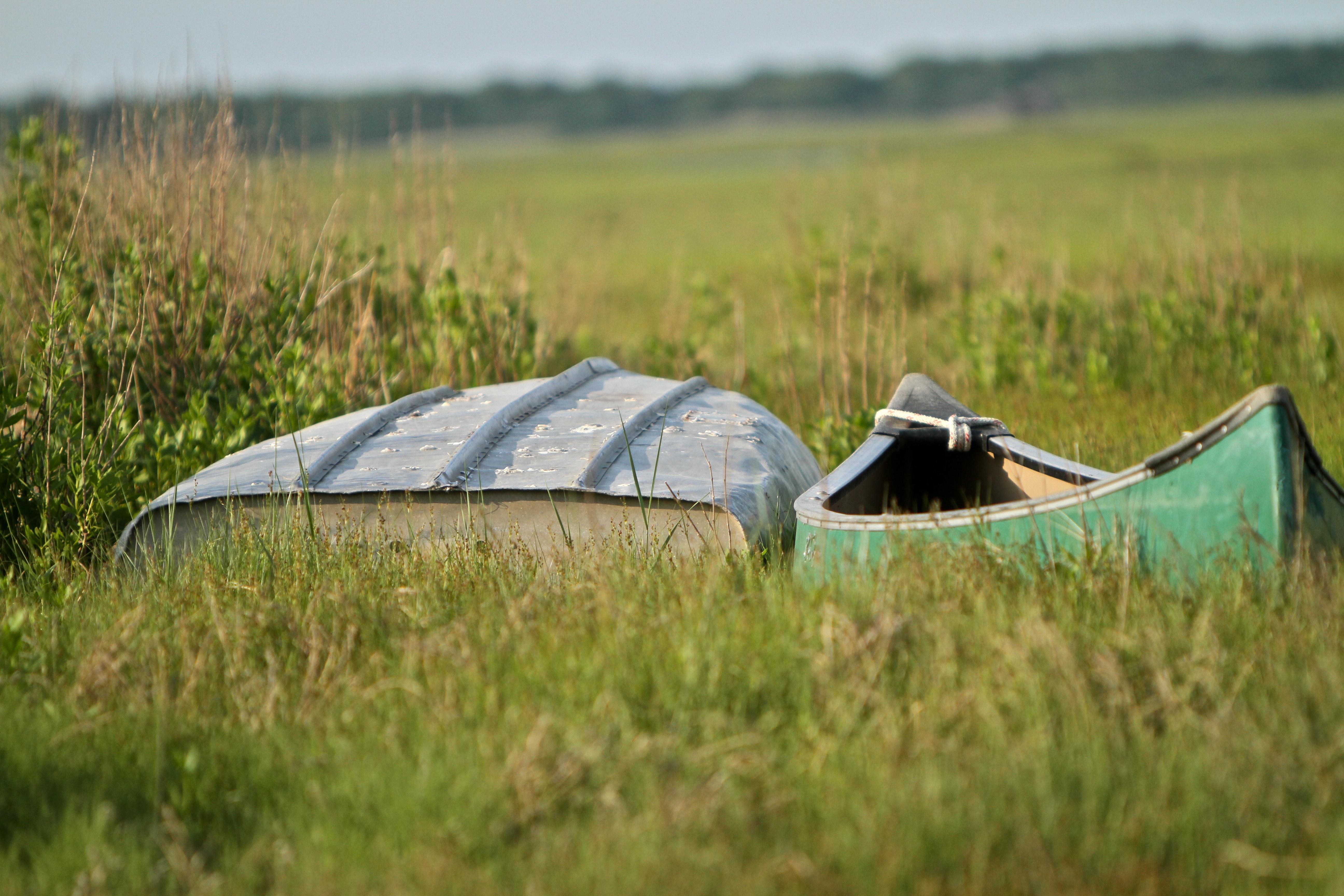 csped ala campo prado ro verde tienda pradera barcos habitat ecosistema rea rural entorno natural kanu