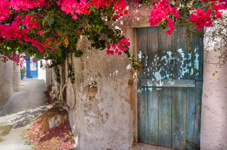 Bougainville Fleur dedans images gratuites : Île grecque, rouge, fleurs, bougainville, vieux