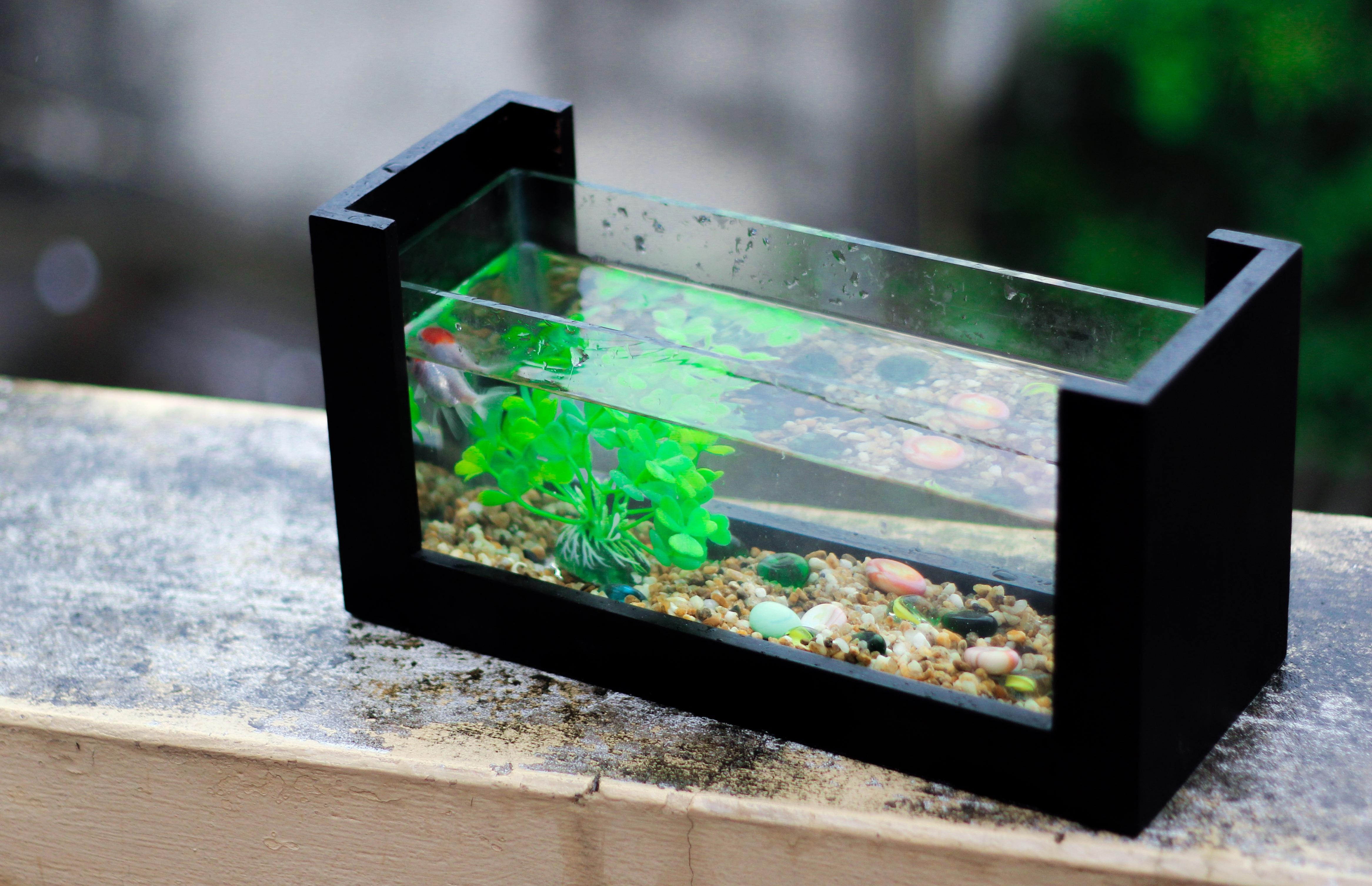 Kostenlose foto : Grün, Biologie, frisch, Fisch, Aquarium ...