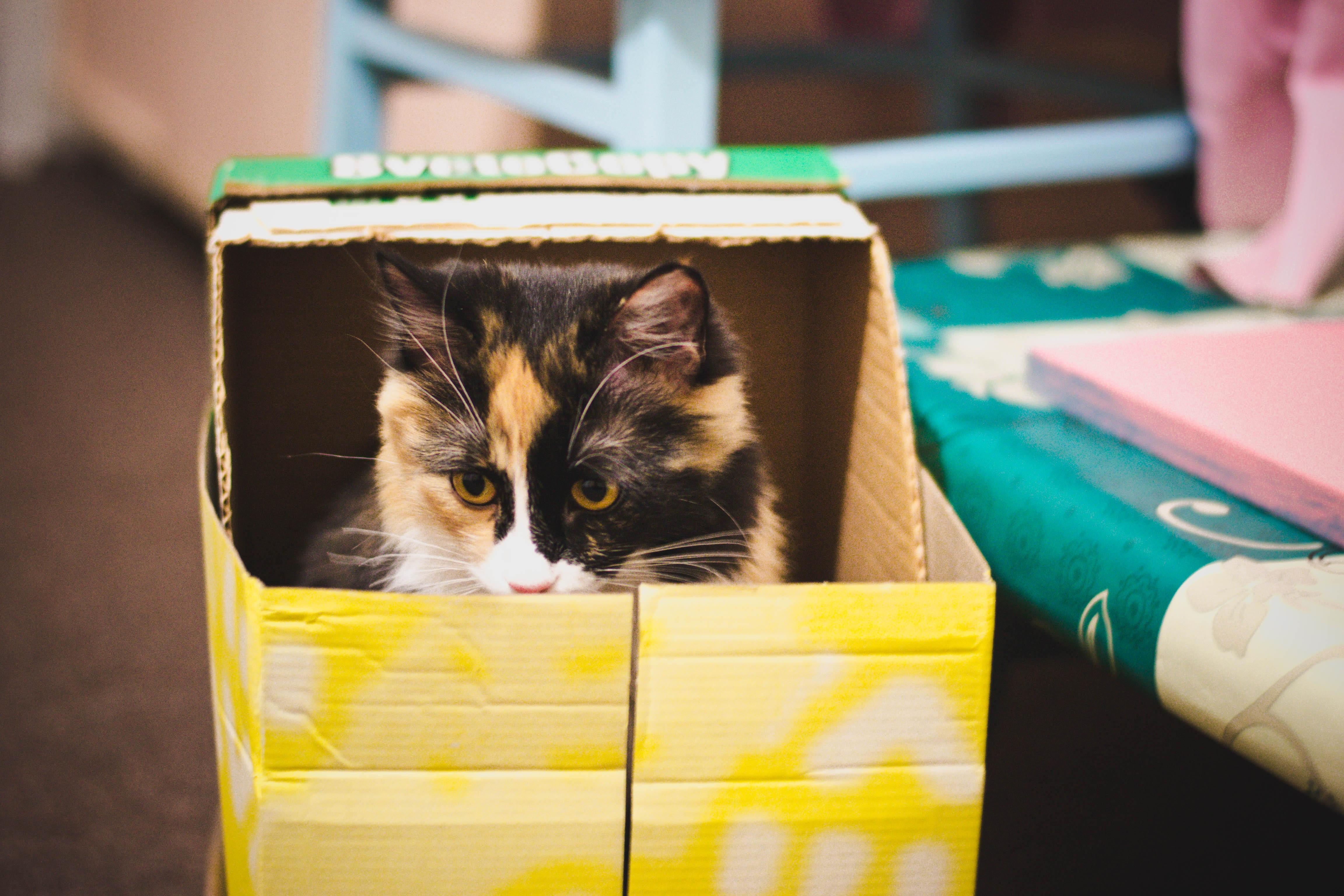 Картинка кошки в коробке