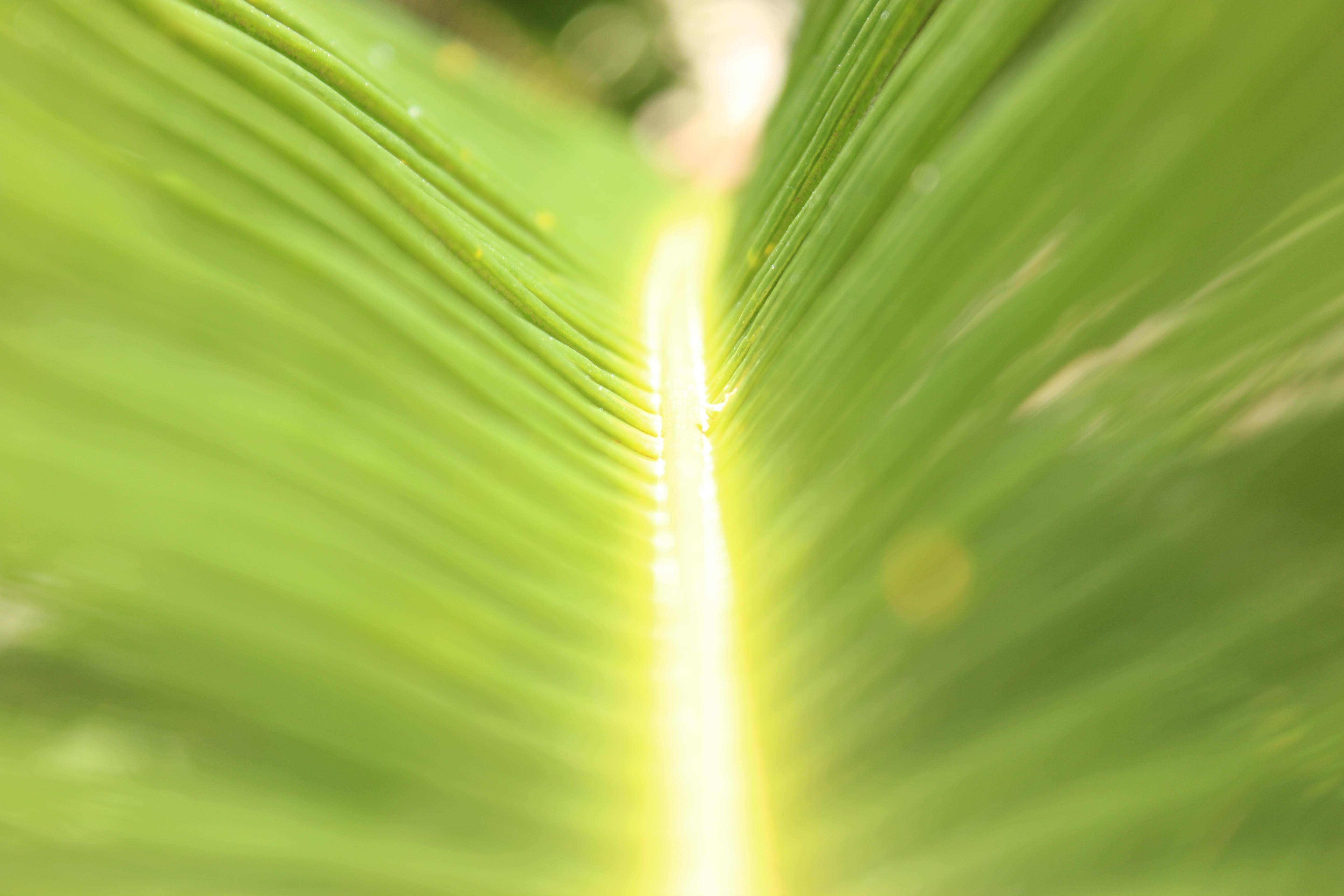 無料画像 緑 閉じる マクロ撮影 太陽光 バナナの葉 水分 草家