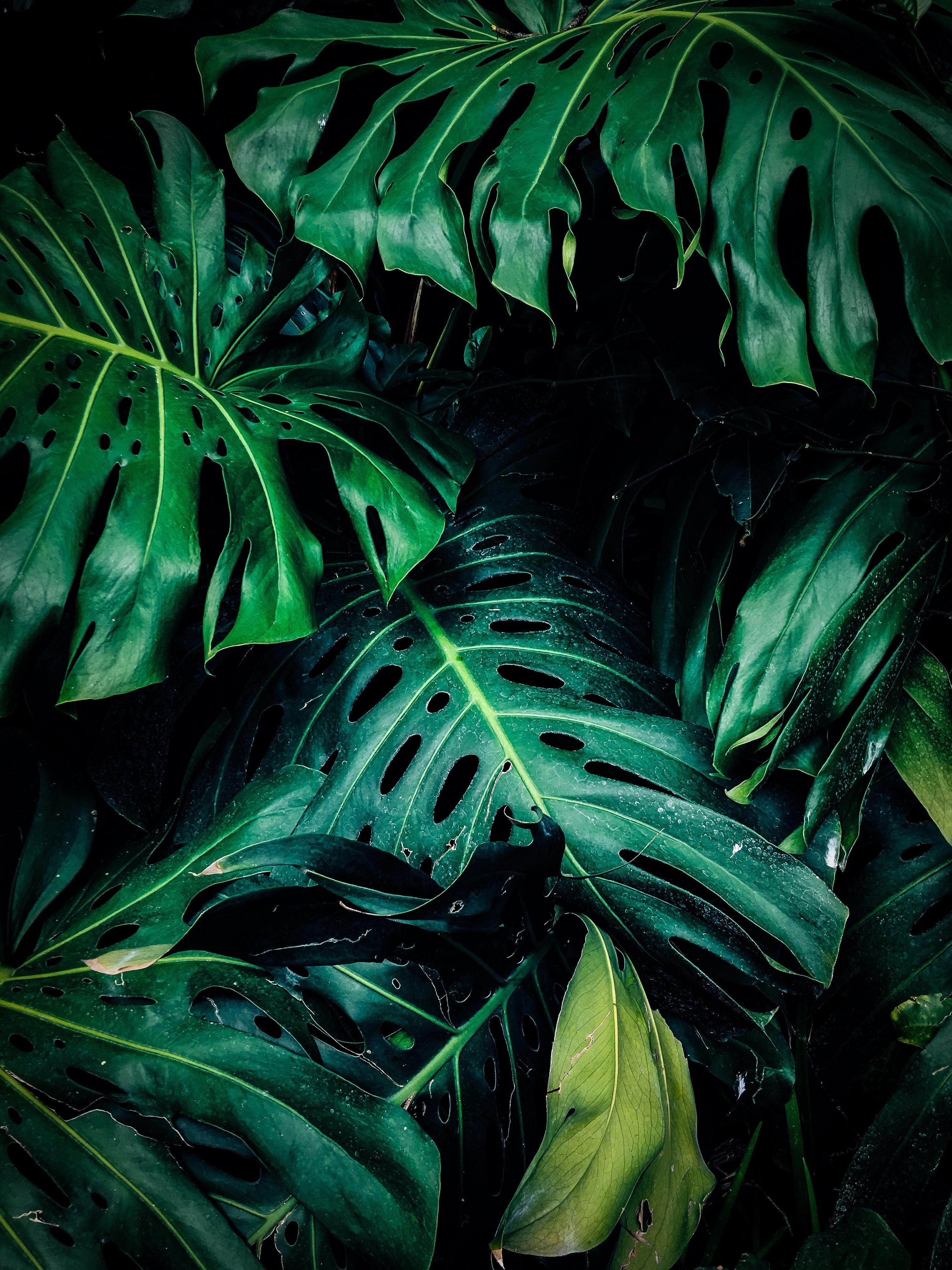 Красивая картинка с листьями монстеры