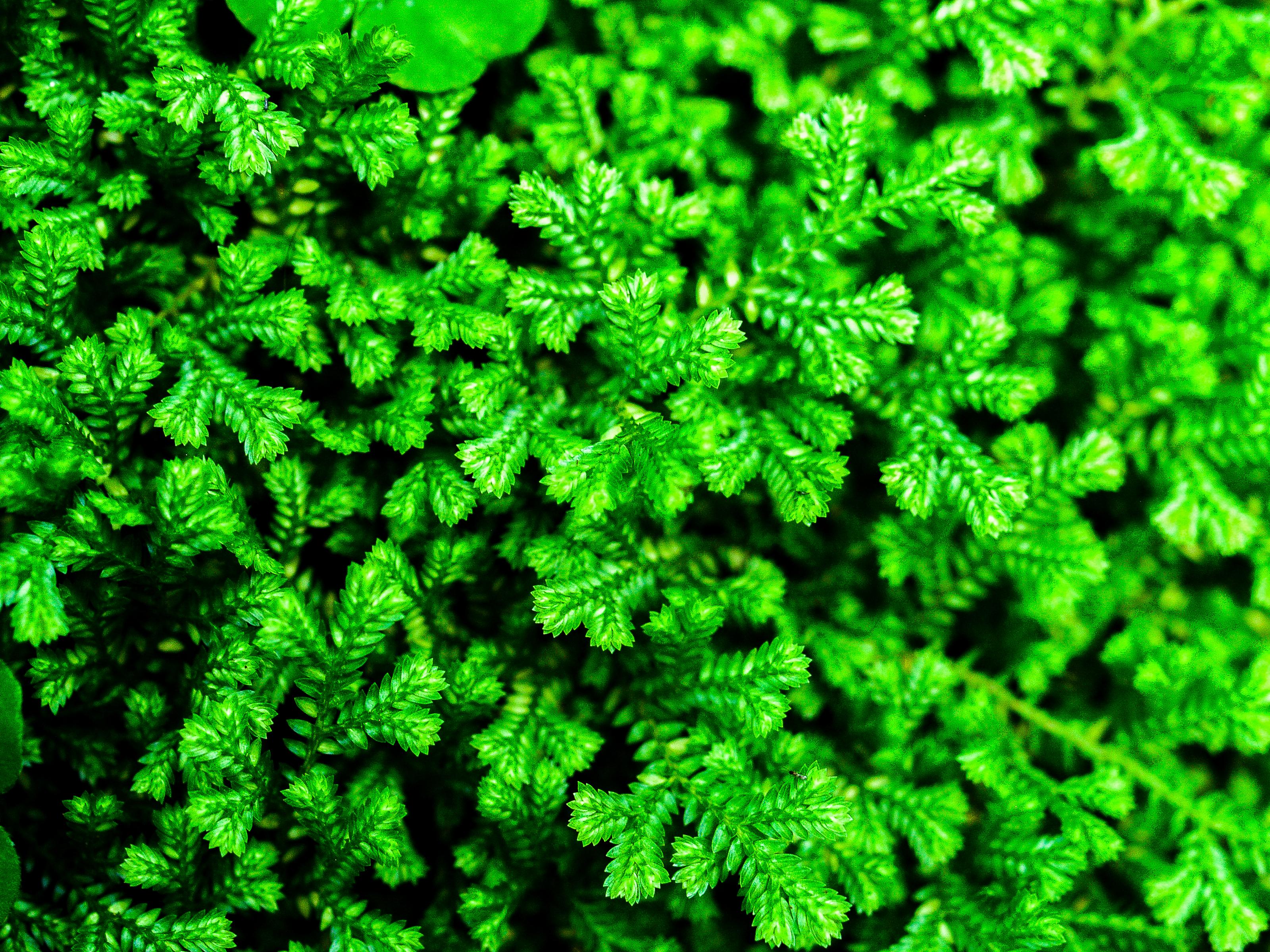 Free Images Green, Natural, Flora, Leaf, Nature, Tropical, Fern, Background,