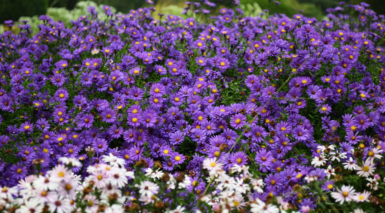 Images Gratuites Croissance Champ Prairie Fleur Ete