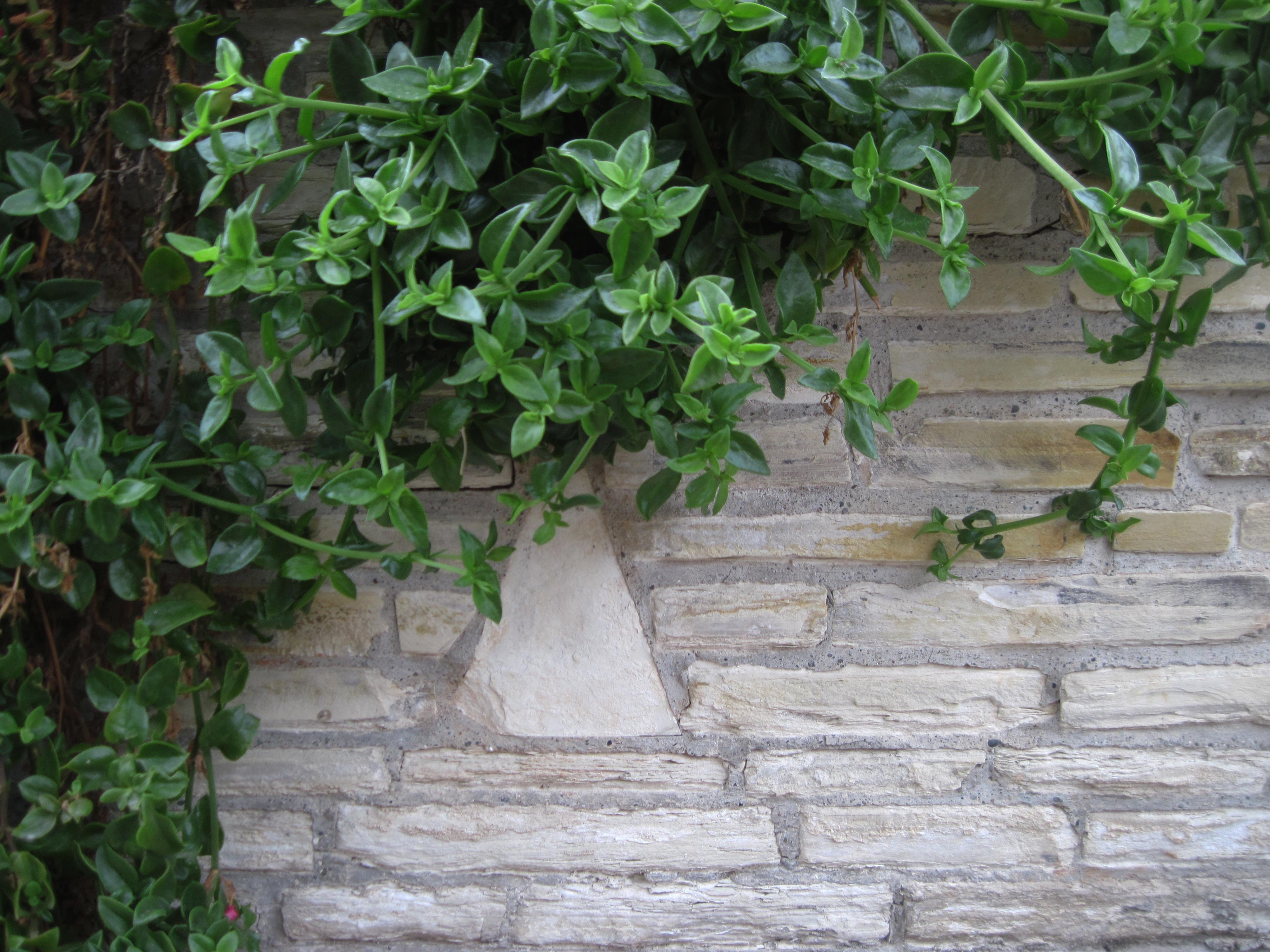 Pared de jardin medium size of de ideas increbles sobre - Jardines de pared ...