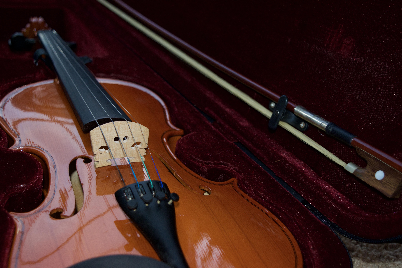 free images : acoustic guitar, musical instrument, velvet, case