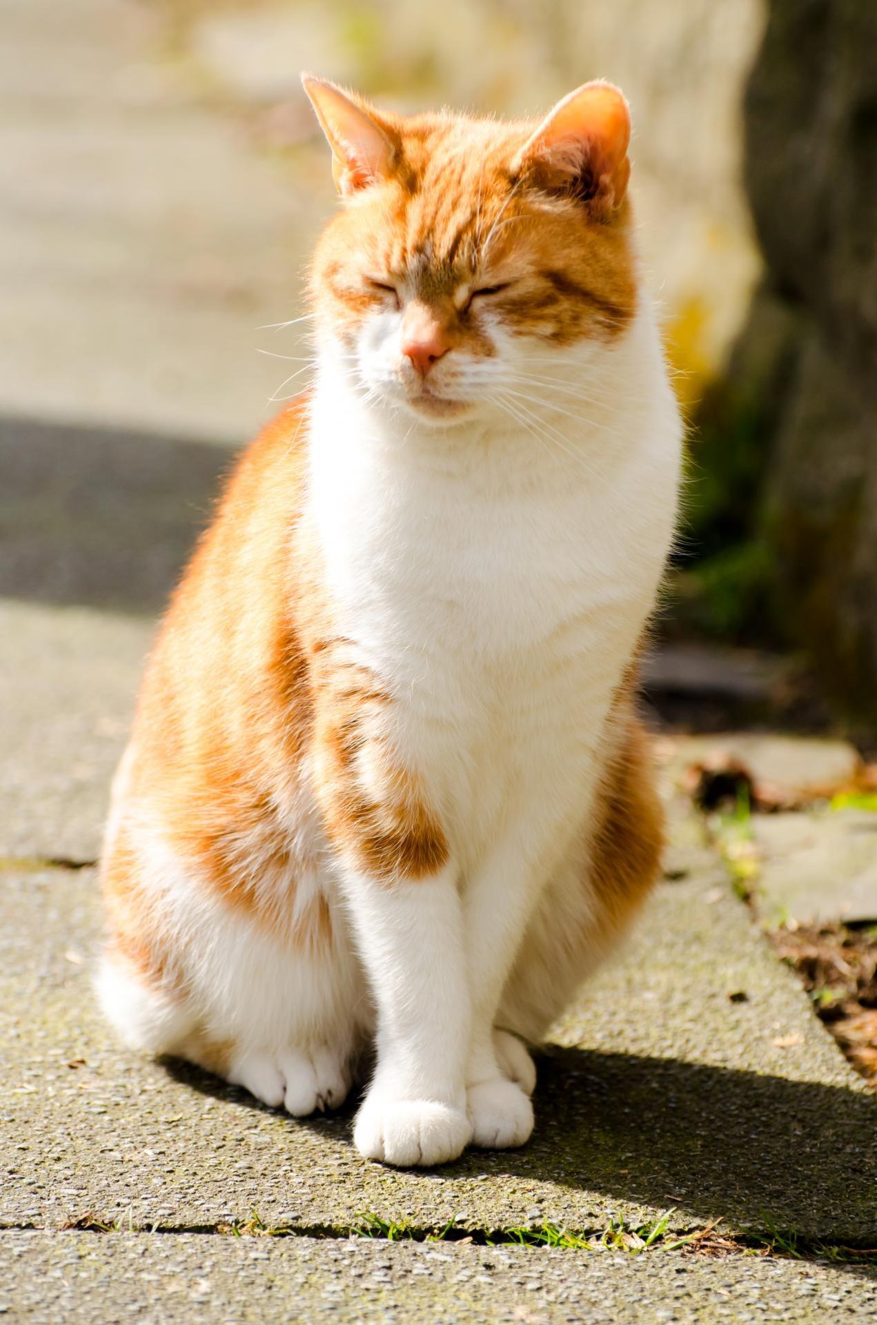 Download 108 Background Kucing Orange HD Gratis