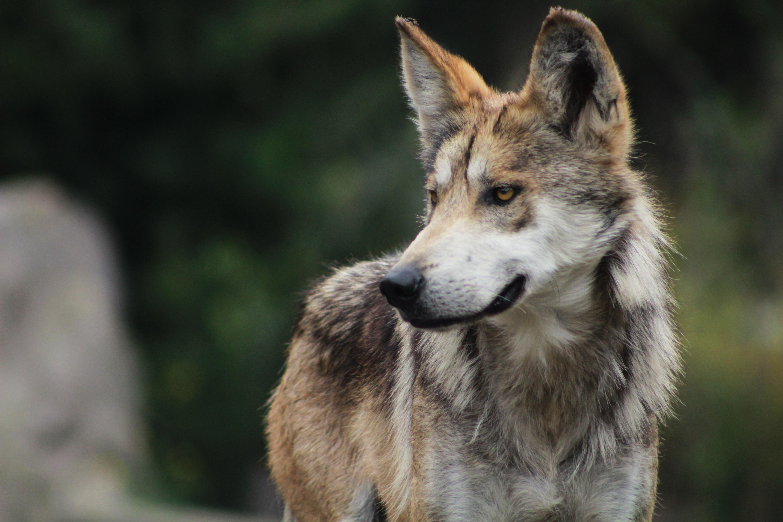 Fotos De Animales Salvajes Para Fondo De Pantalla: Imagenes De Animales Salvajes Gratis. Awesome Animales