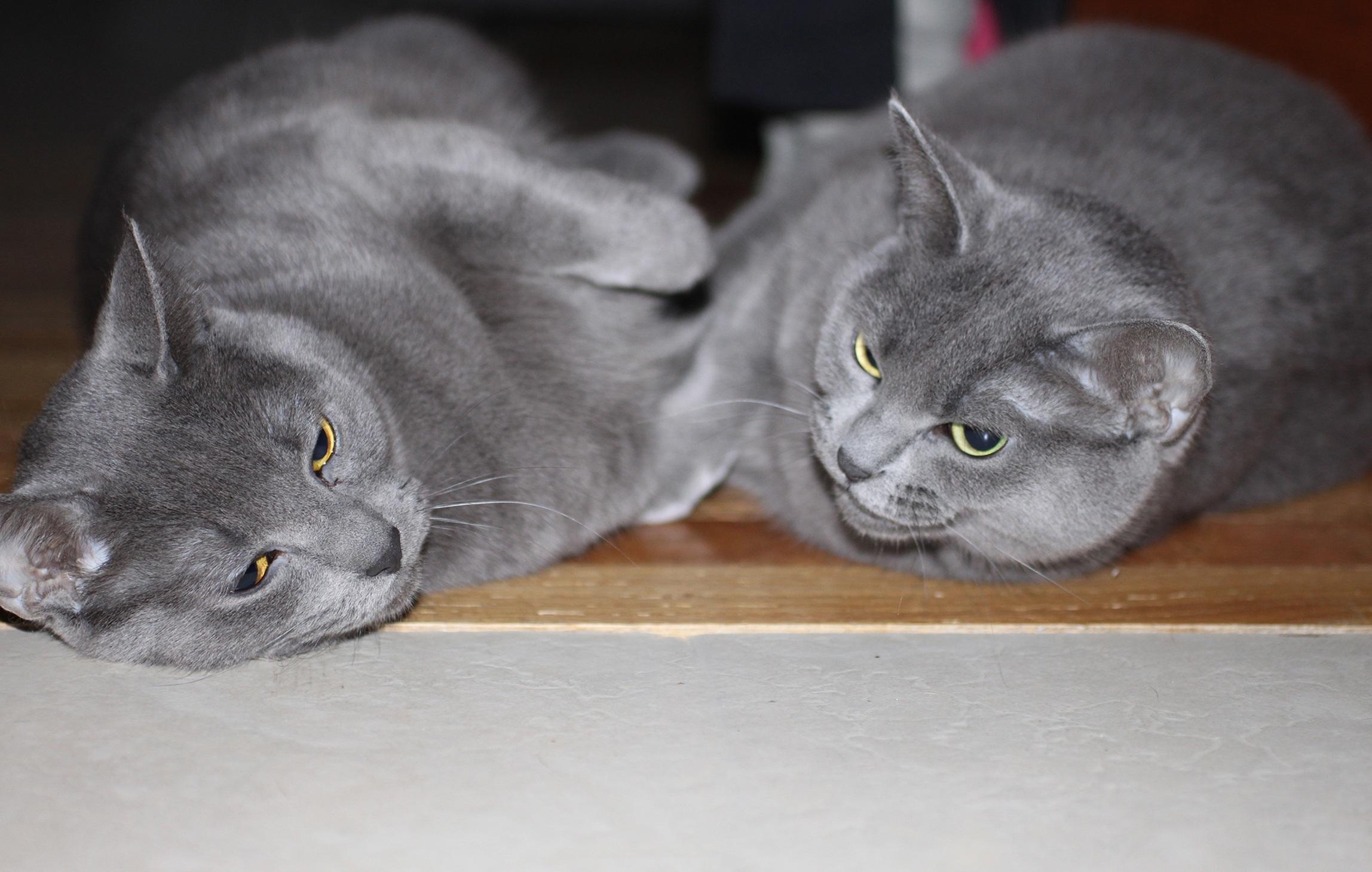 Jeune graisse chatte photos