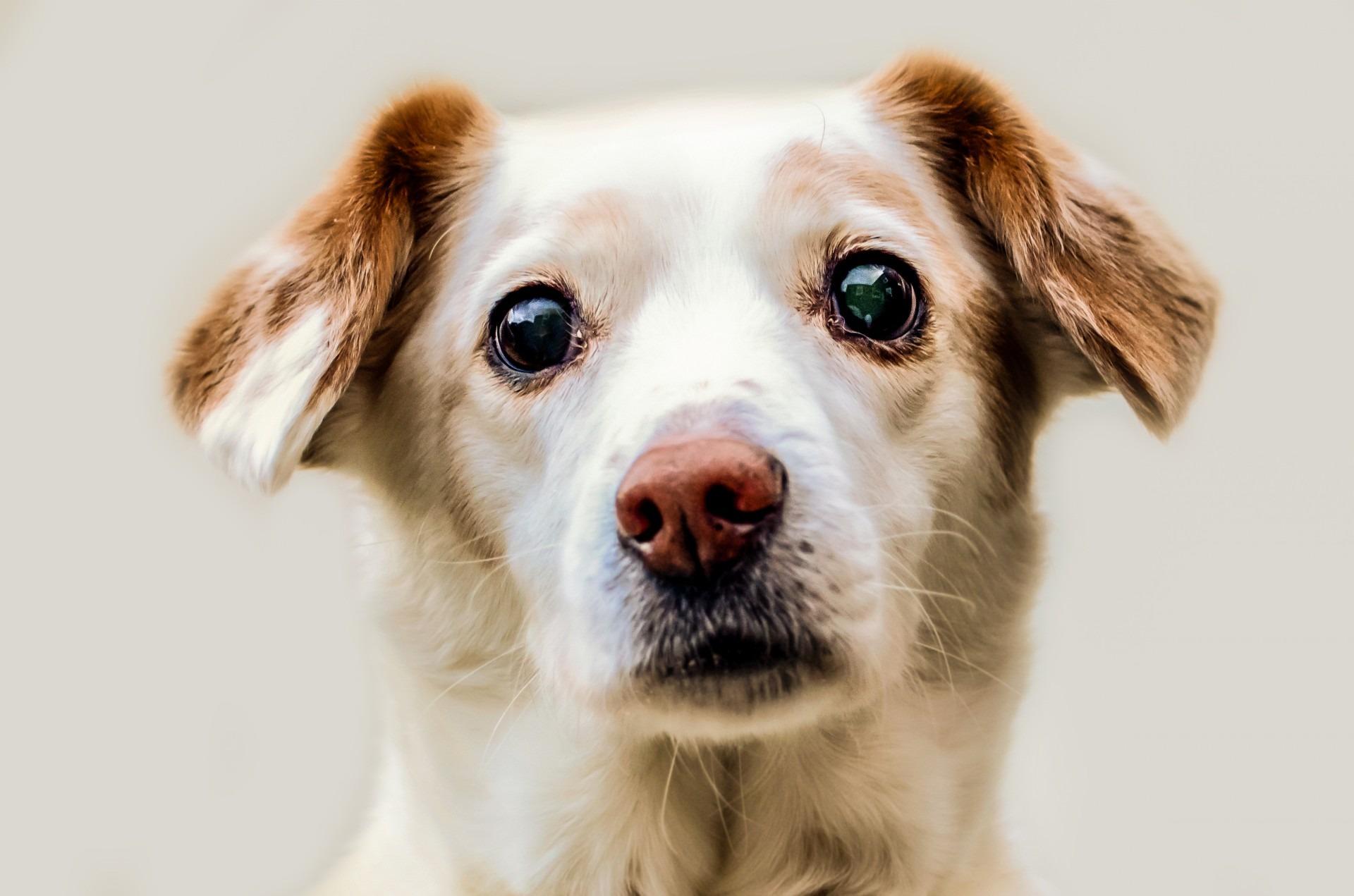 Immagini belle capelli bianca cucciolo da solo - Animale domestico da colorare pagine gratis ...