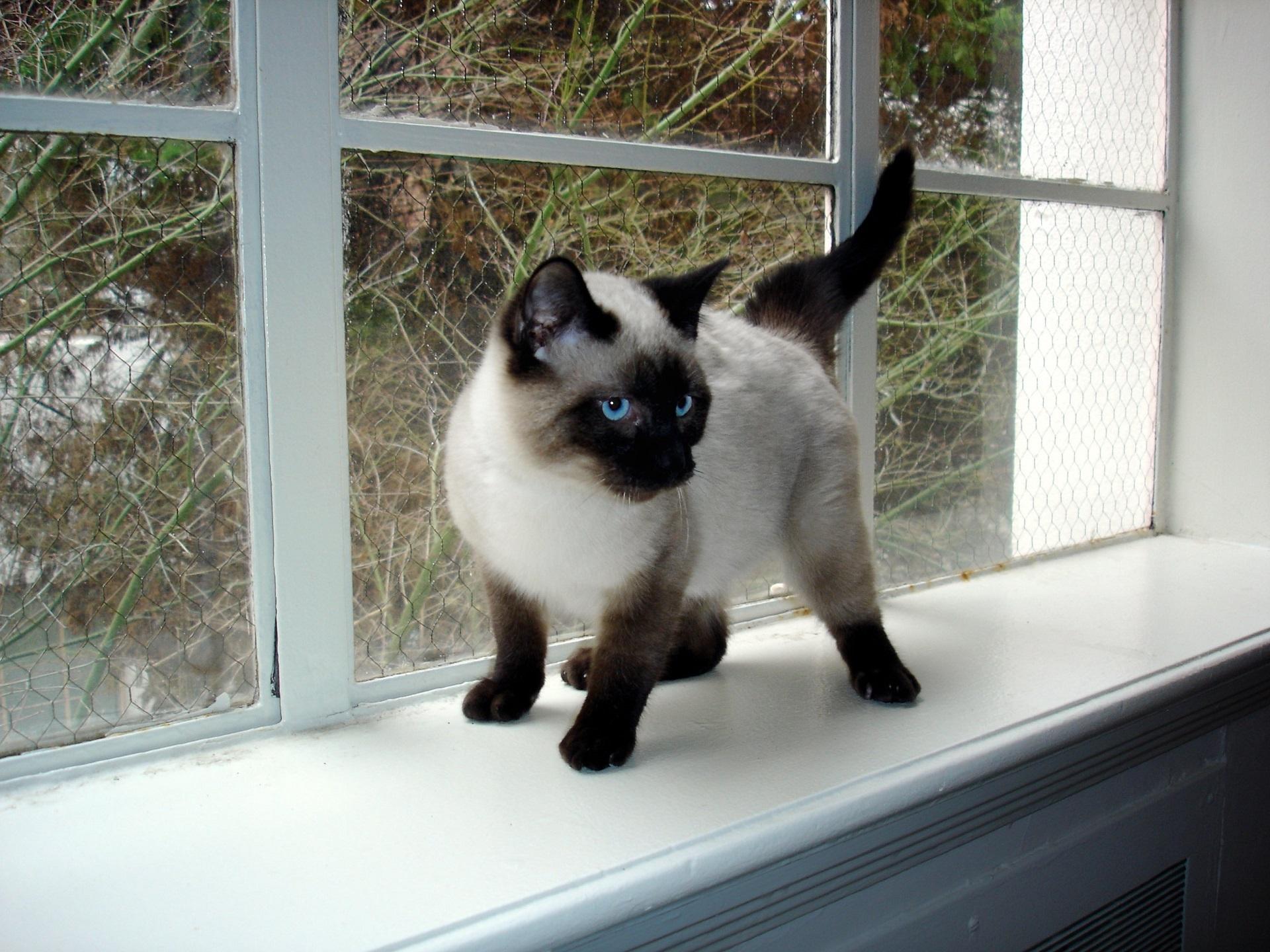 Free Images : hair, window, animal, looking, pet, fur
