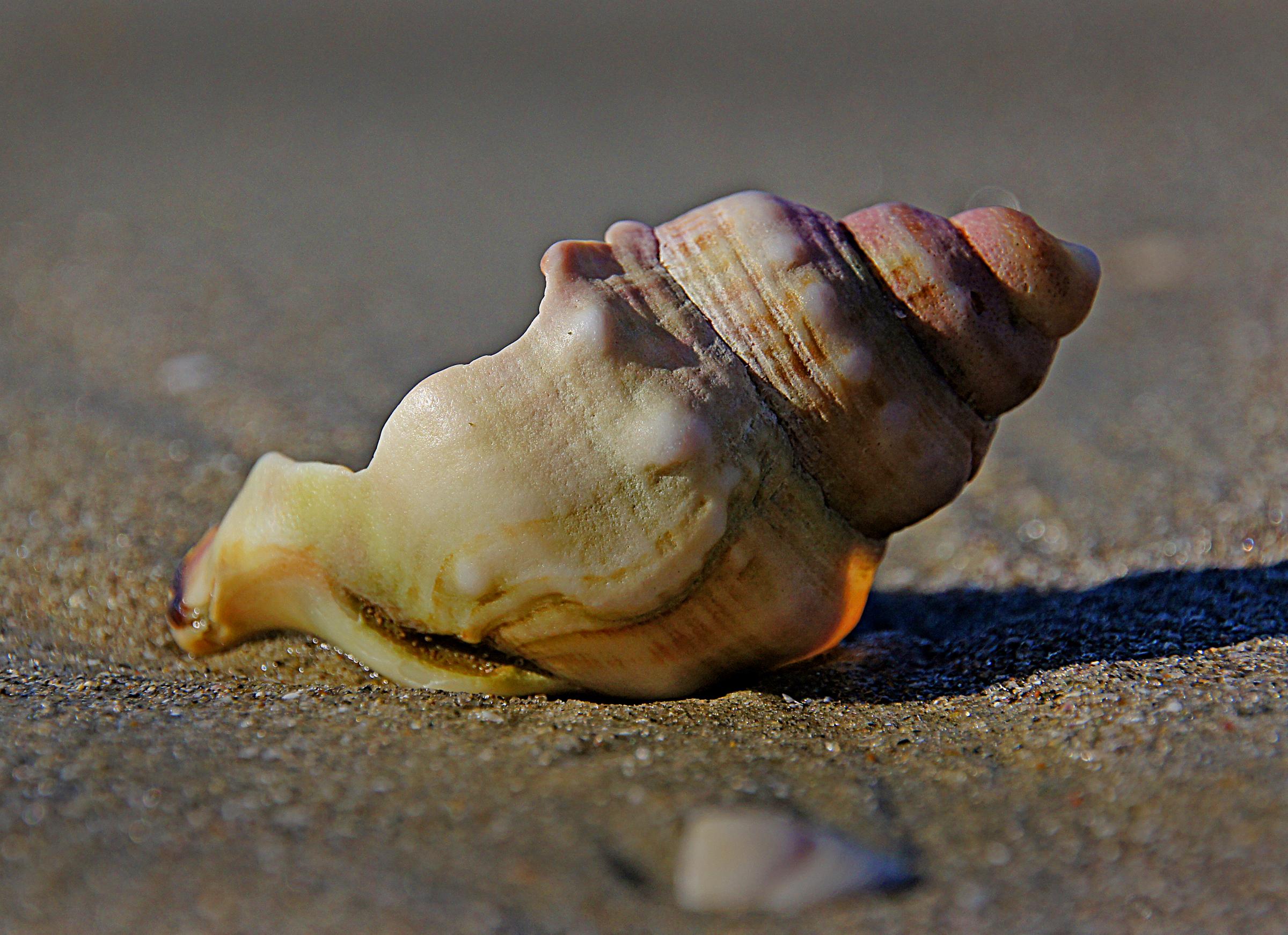 Gambar Tangan Makanan Laut Pantai Laut Bahan Invertebrata