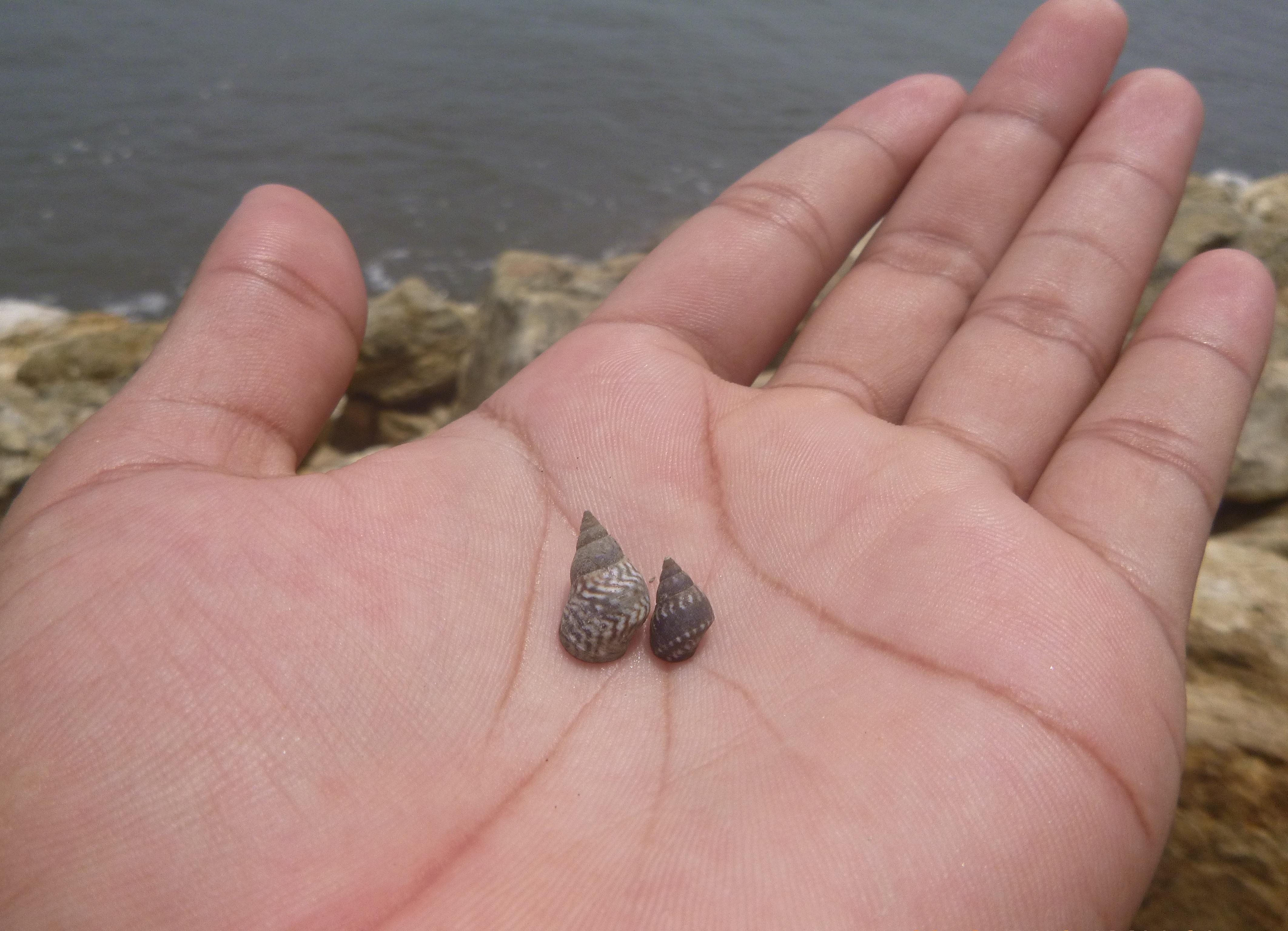 Darmowe Zdjecia Dlon Plaza Morze Woda Natura Piasek Ocean