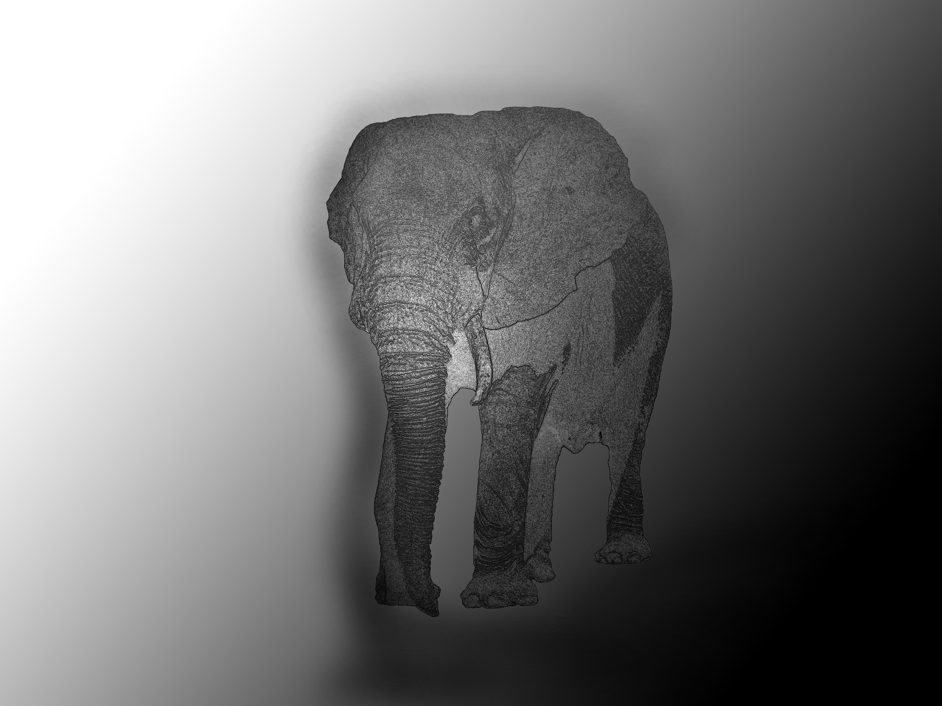 Fotoğraf El Siyah Ve Beyaz Evcil Hayvan Tek Renkli Fil Boyama