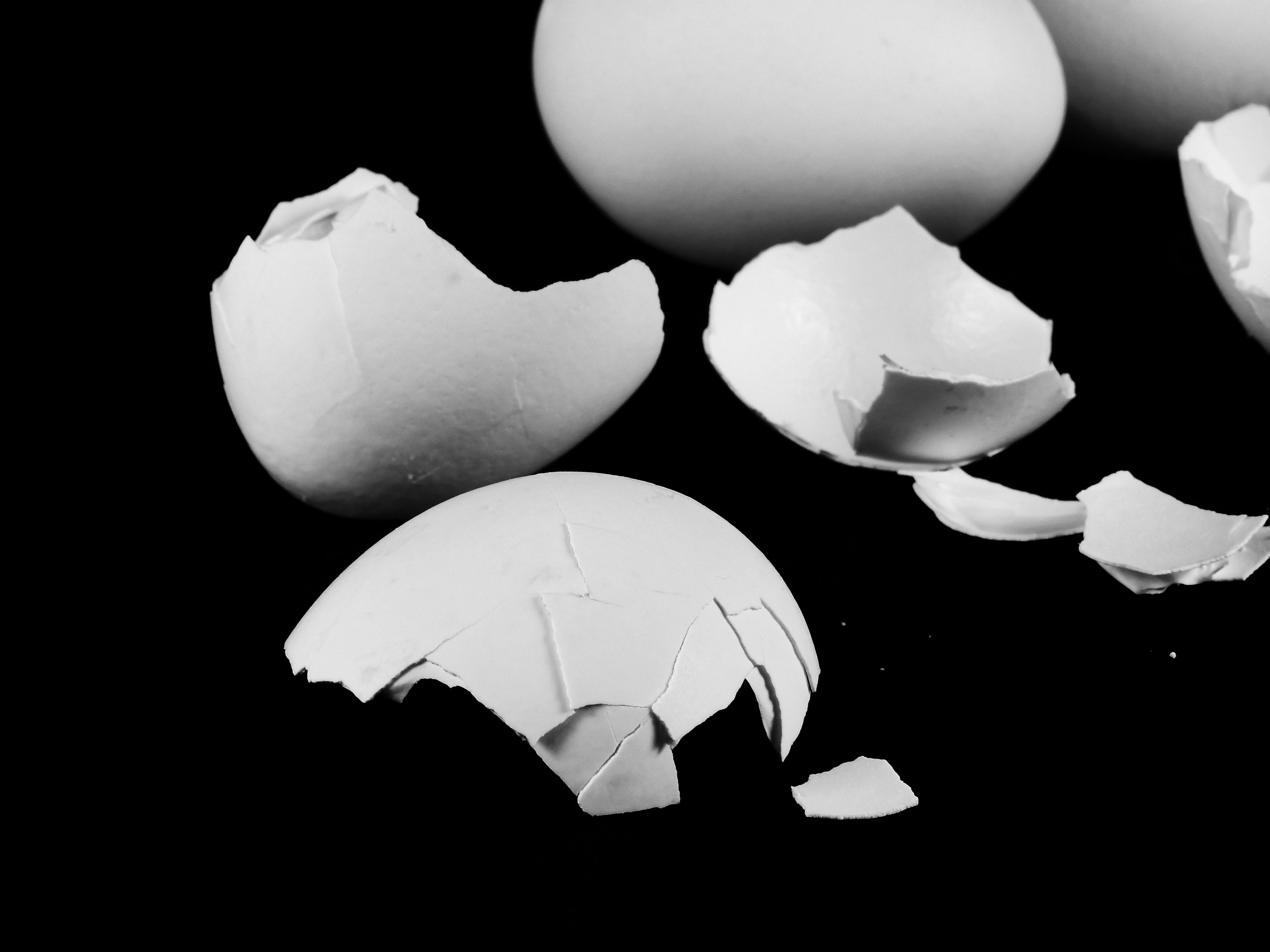 Gambar Tangan Hitam Dan Putih Daun Bunga Makanan Rusak Satu
