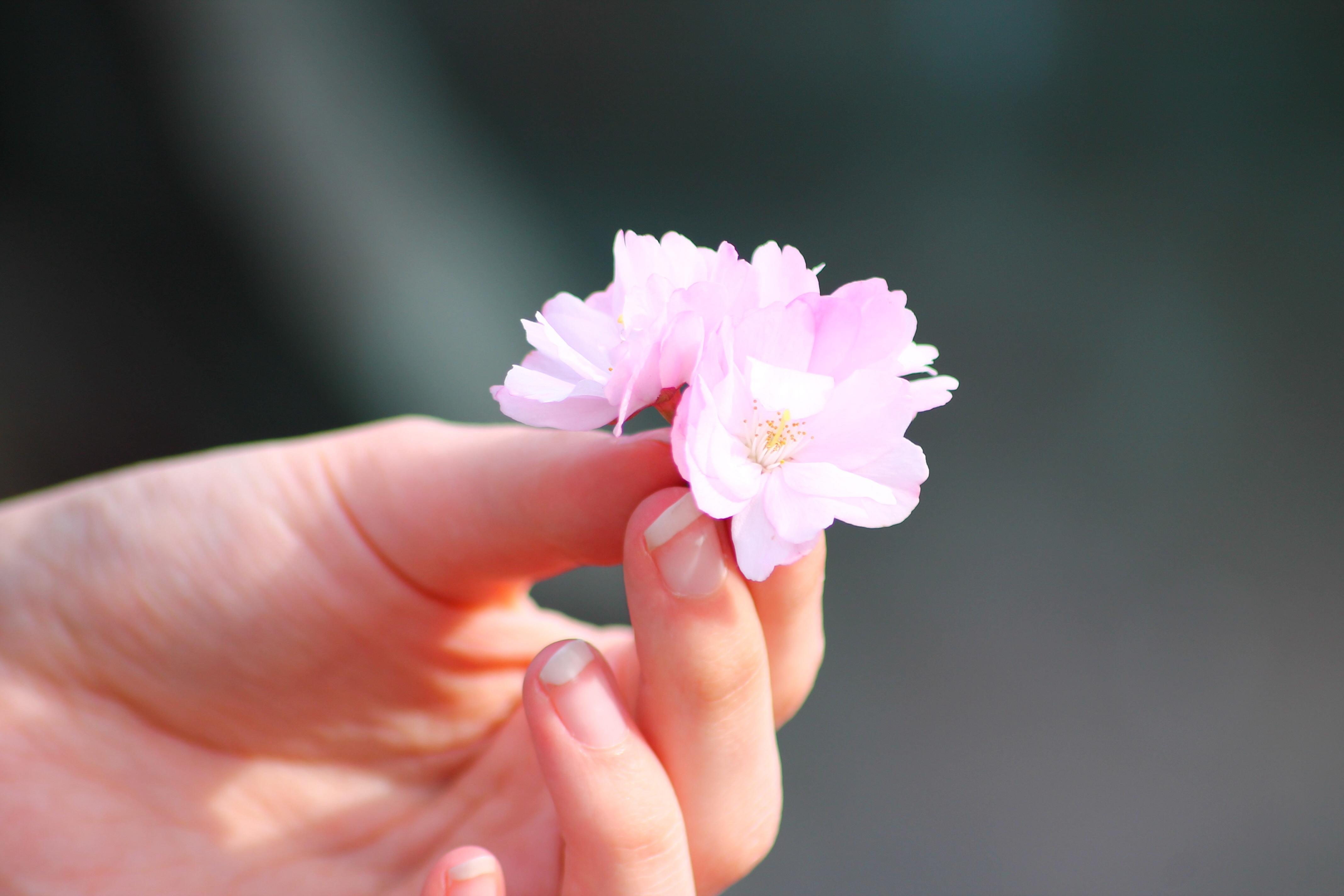 доче фото цветы на ладонях желания сбываются