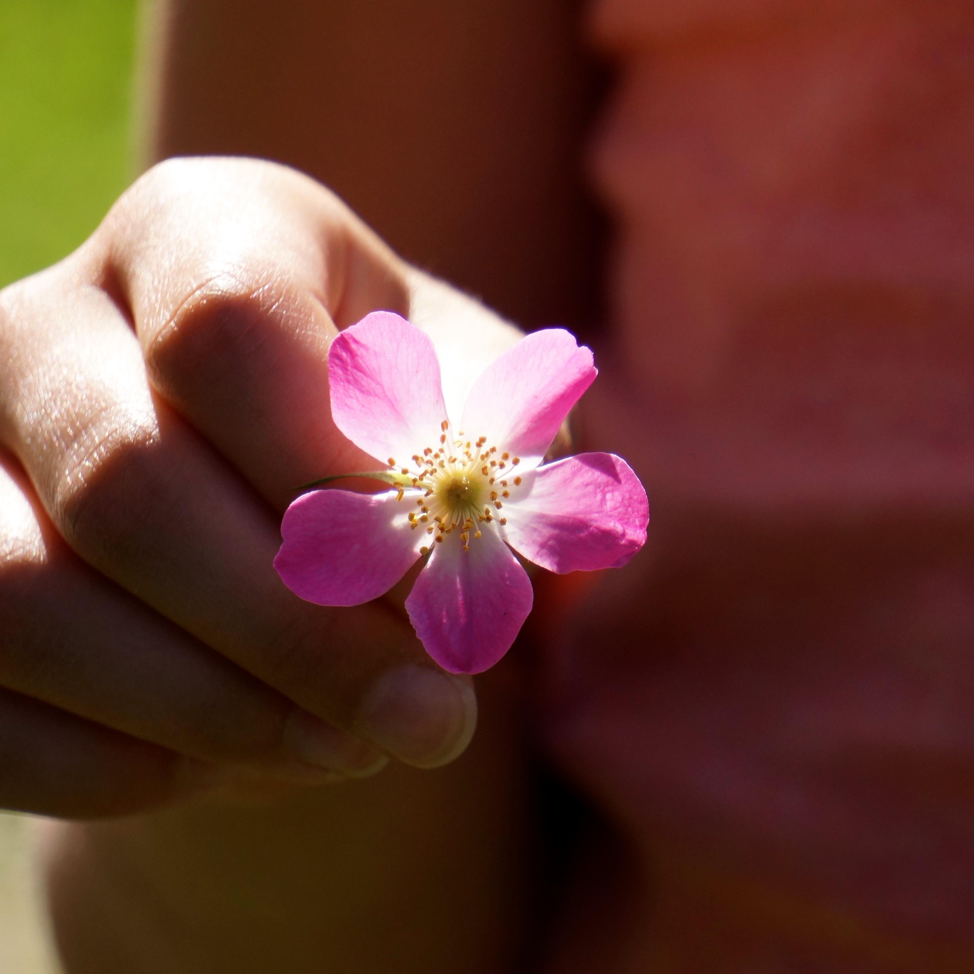 Картинка цветок на ладонях