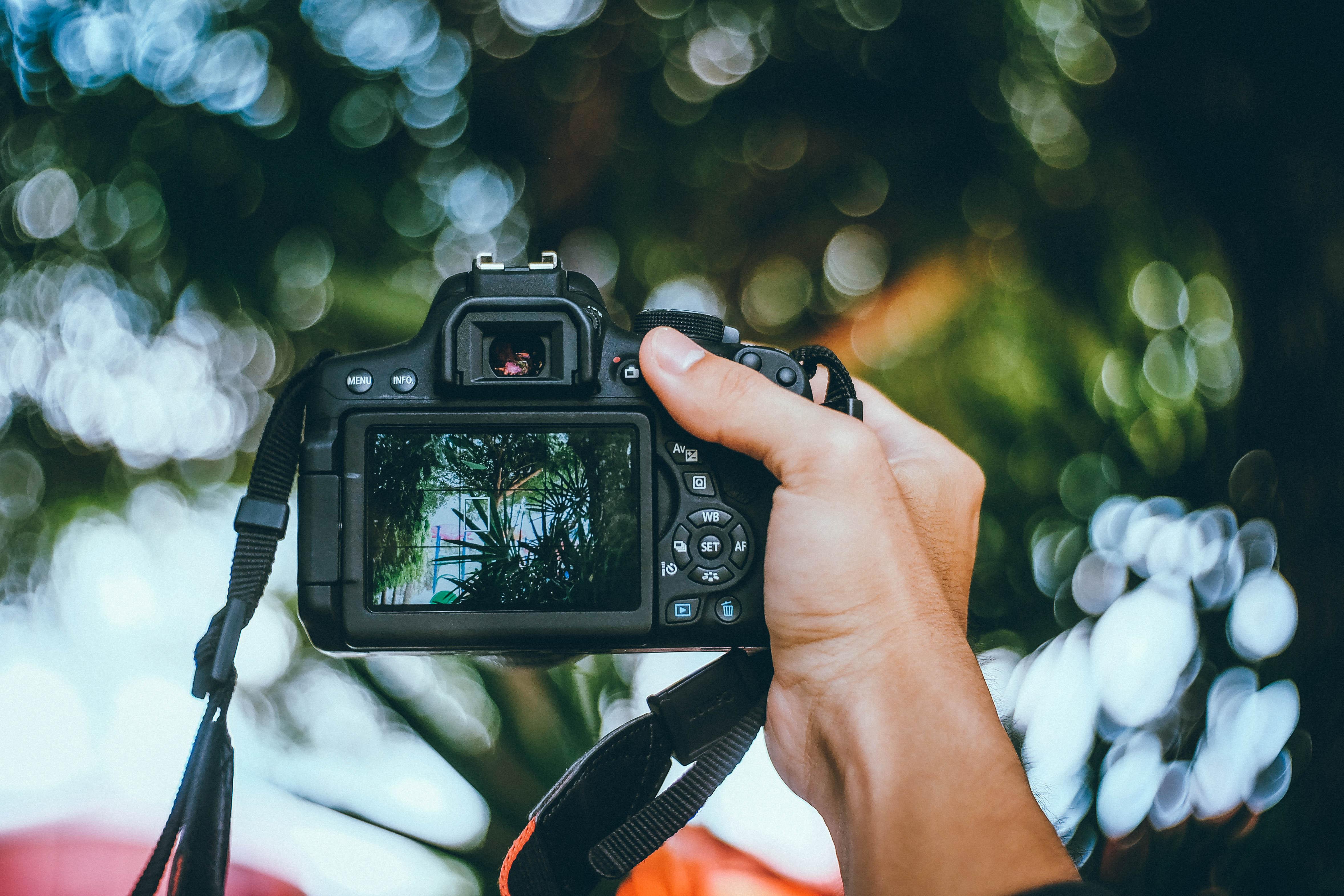эксперта-аналитика фсб как фотографировать на цифровую камеру без бликов мелко нарезанный зеленый