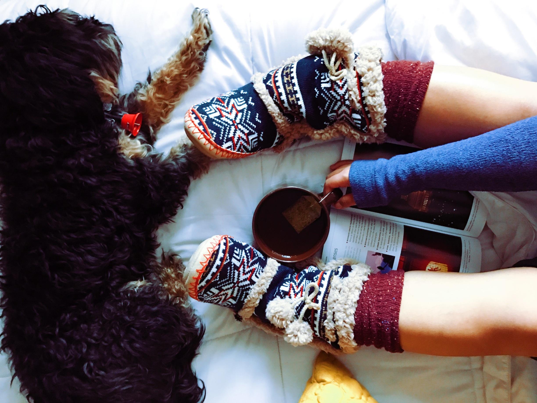 Kostenlose foto : Hand, Buch, warm, Tee, fallen, Hund, Tier, Tasse ...