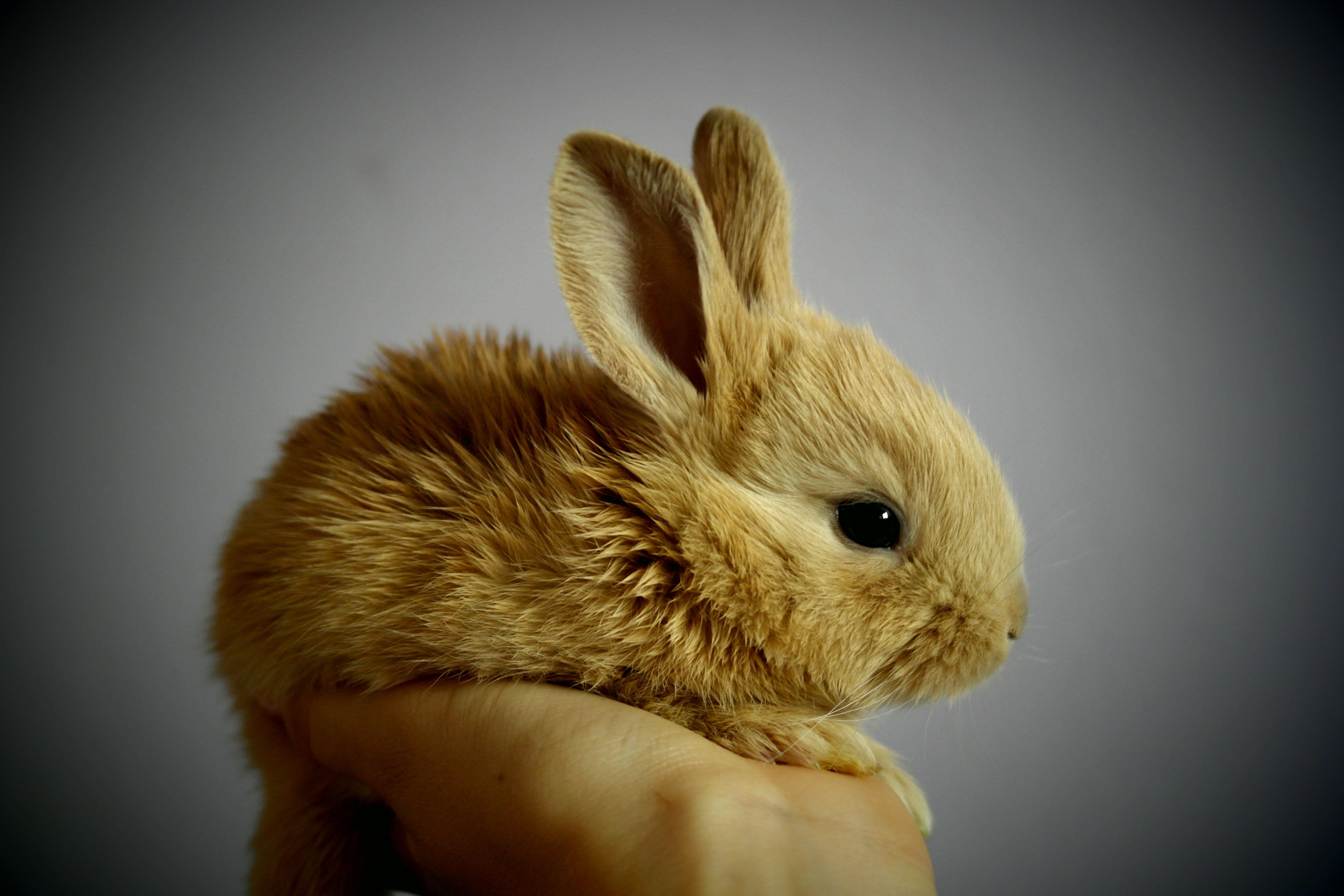 Кролик макро  № 3207763 бесплатно