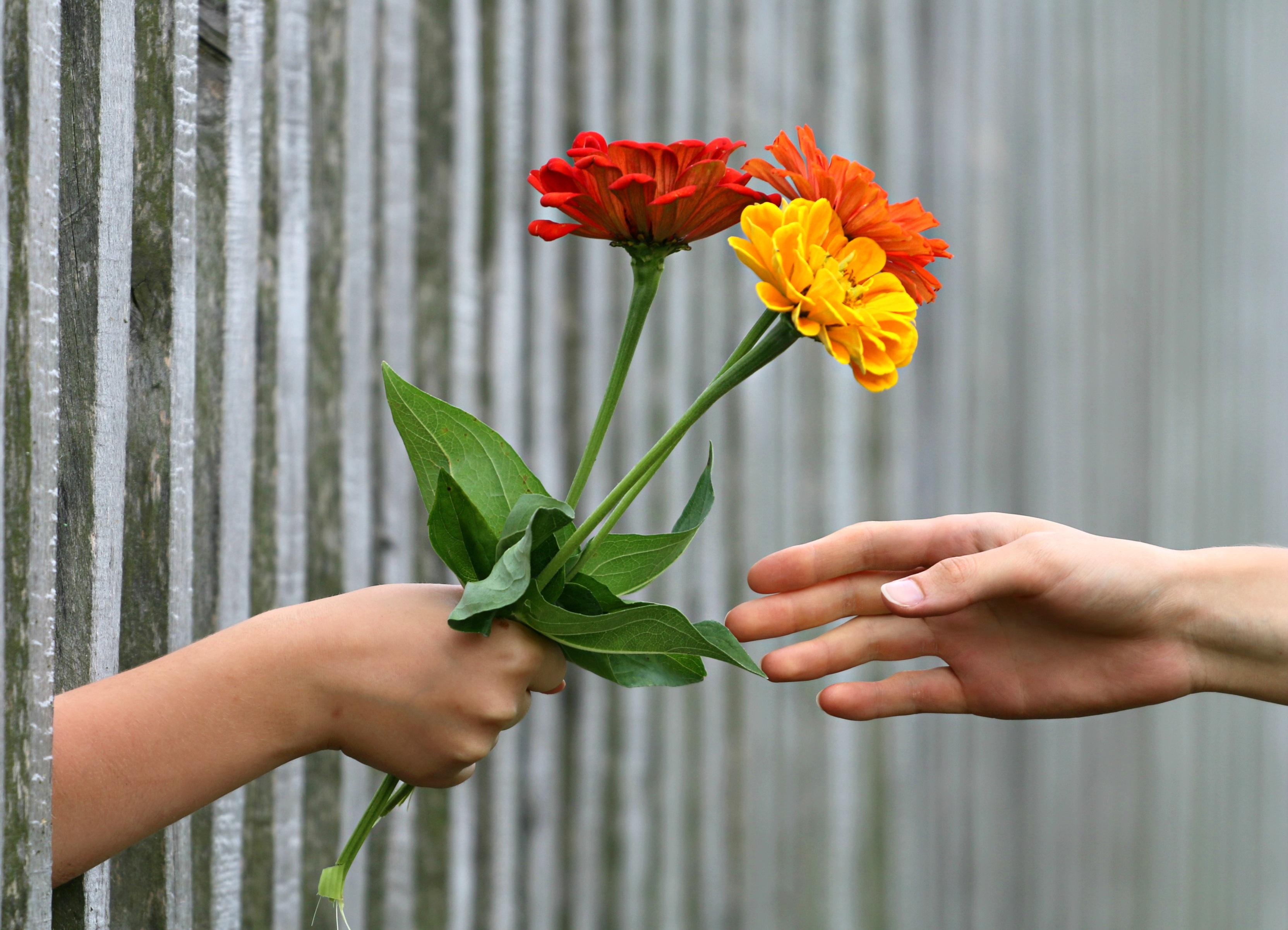 Free Images : hand, fence, petal, gift, botany, flora, flowers ...