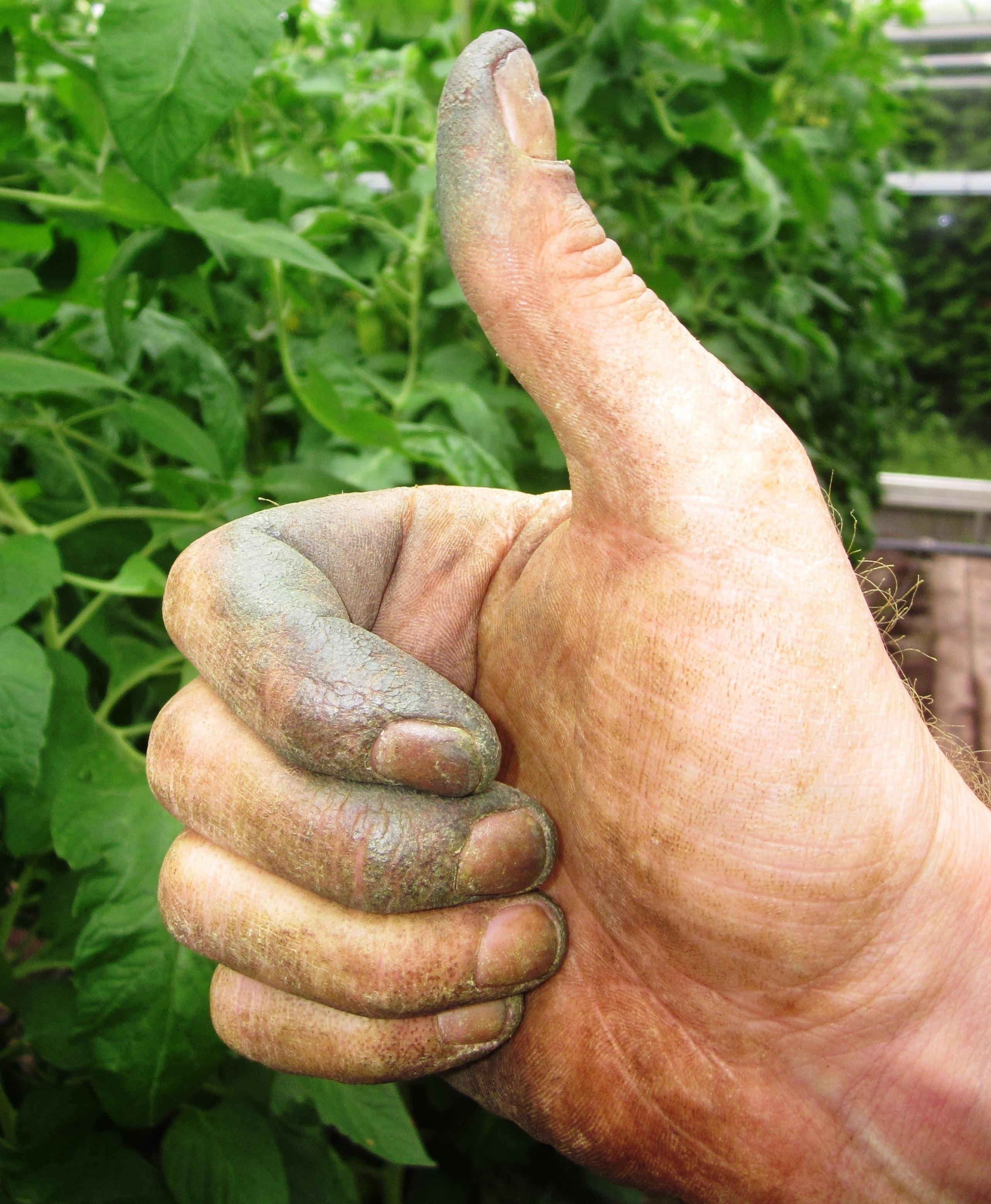 Fotos gratis : mano, flor, dedo, verde, Produce, suelo, brazo ...