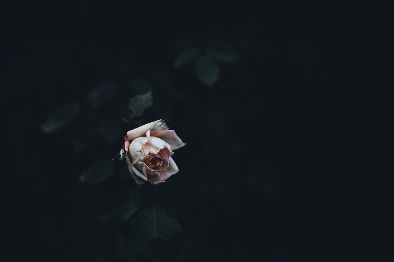сизоворонок картинки цветы мрака сама нитрокраска