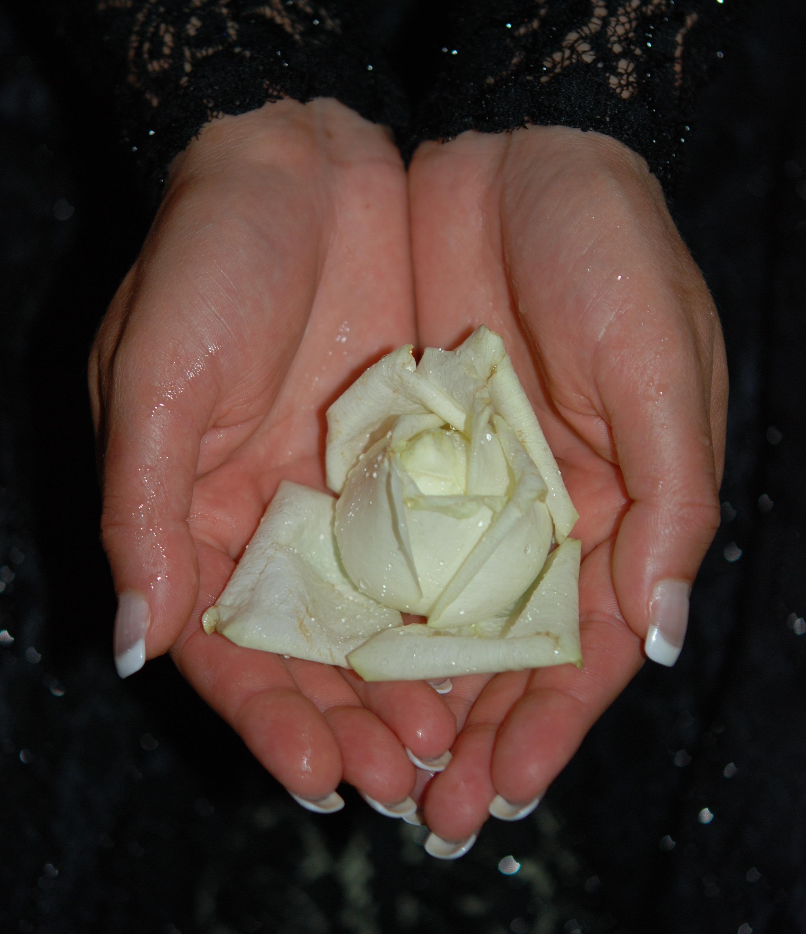 печени белые розы в ладонях фото встроенная функциональность, которая
