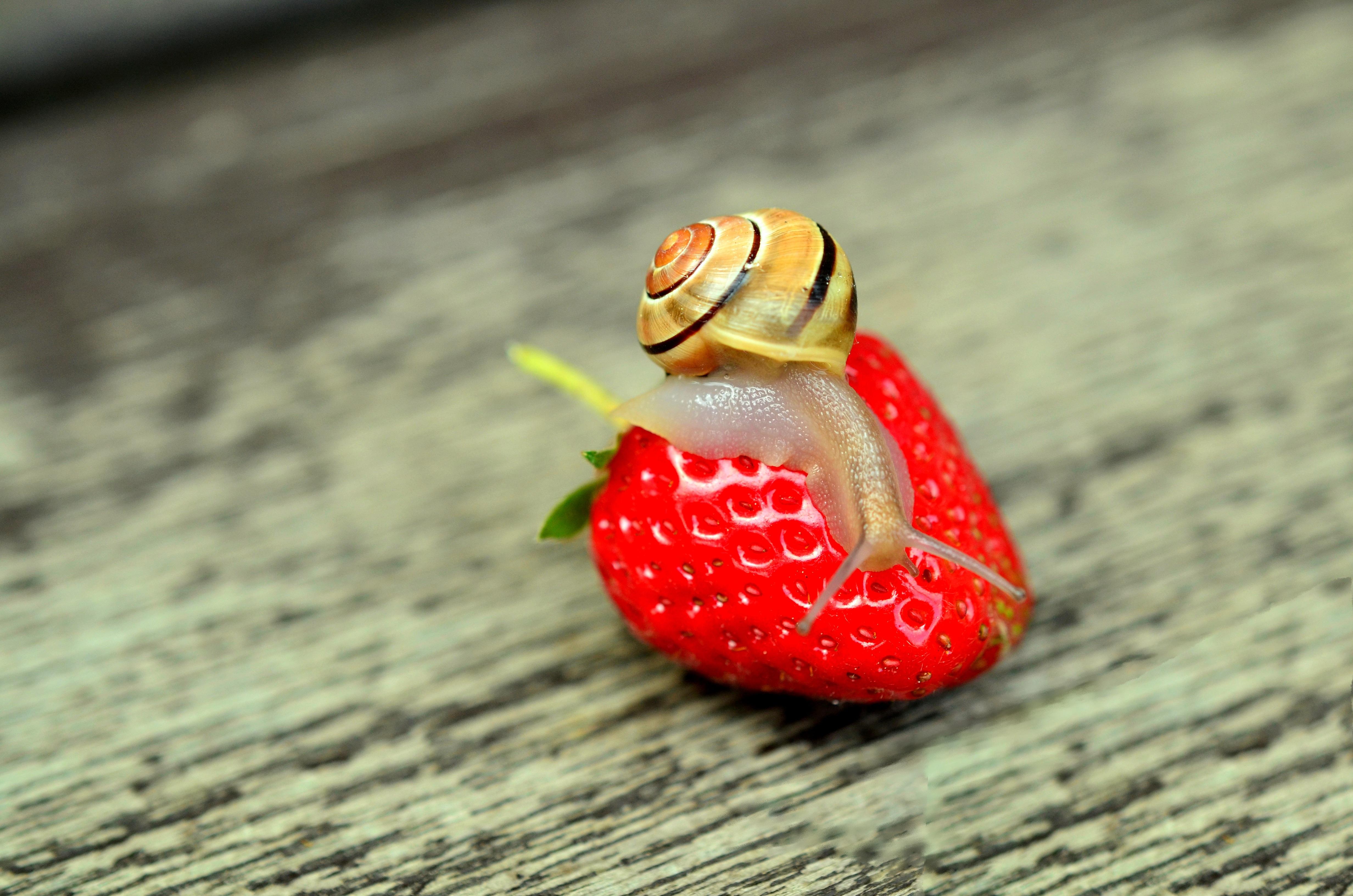 Kostenlose Foto Hand Frucht Blume Lebensmittel Rot