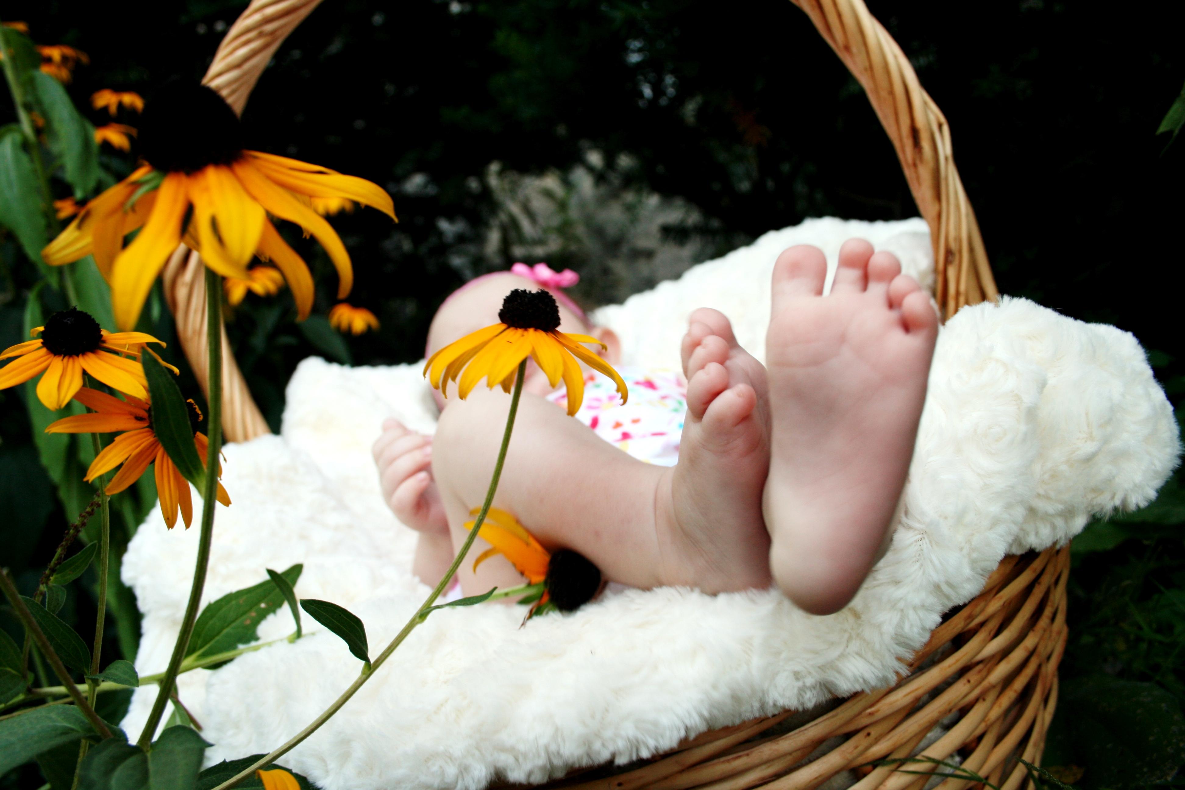 Free Images : hand, girl, flower, spring, child, basket, flora ...