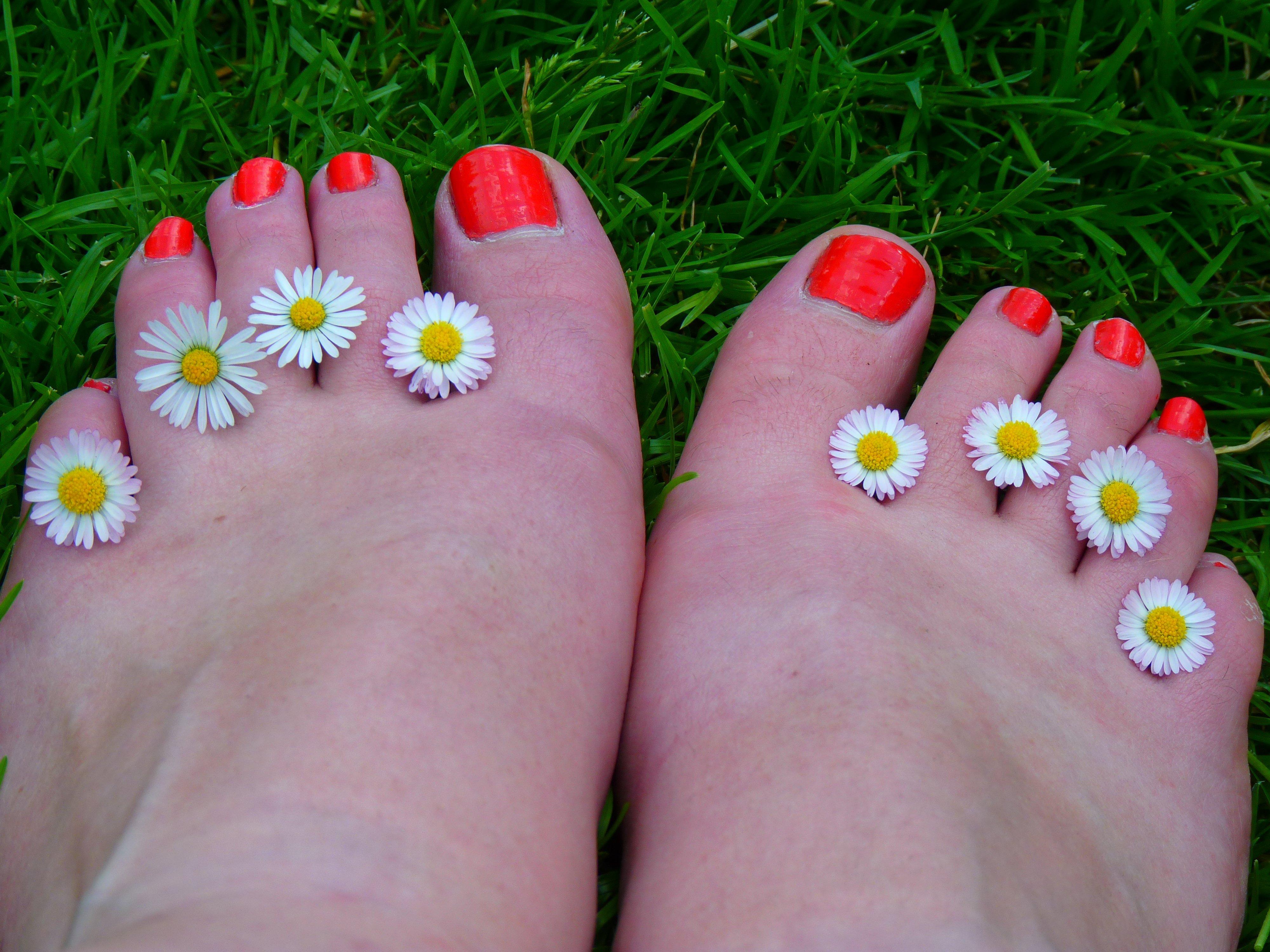 Fotos gratis : mano, césped, flor, pétalo, Pies, verano, margarita ...