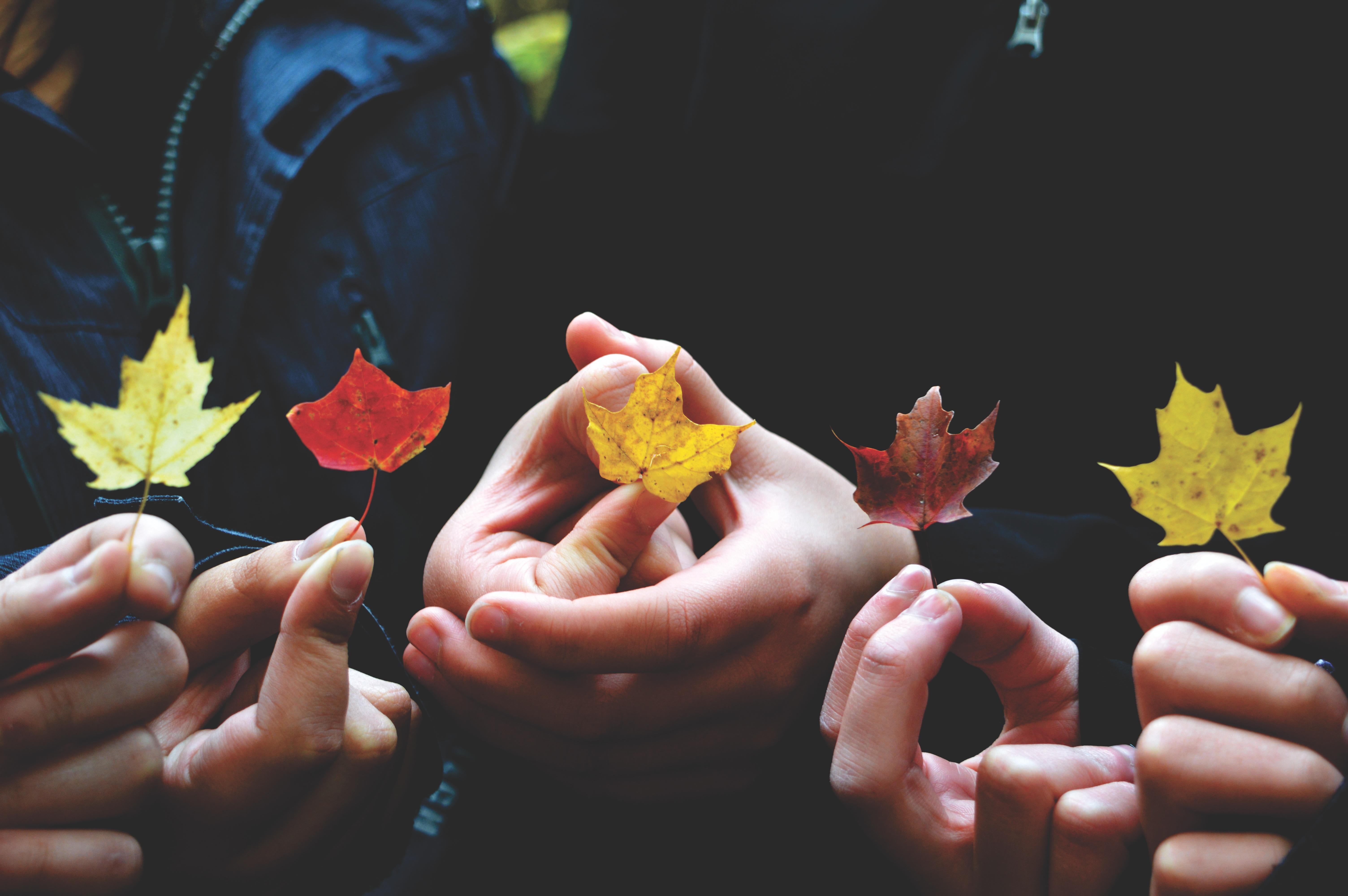 Gambar Tangan Kelompok Daun Jatuh Bunga Musim Gugur Leafe