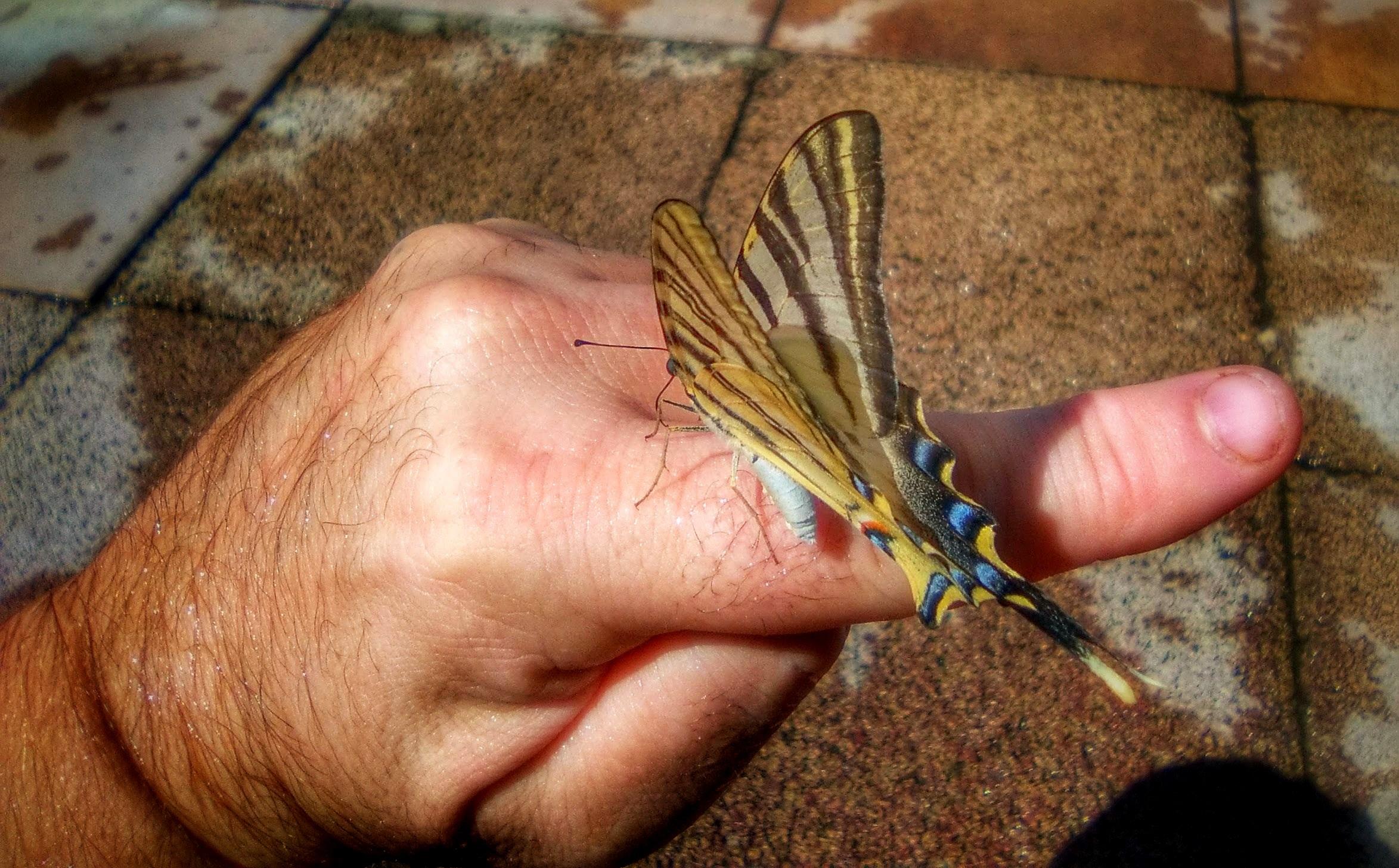 Fotos gratis : mano, hoja, dedo, insecto, polilla, mariposa ...