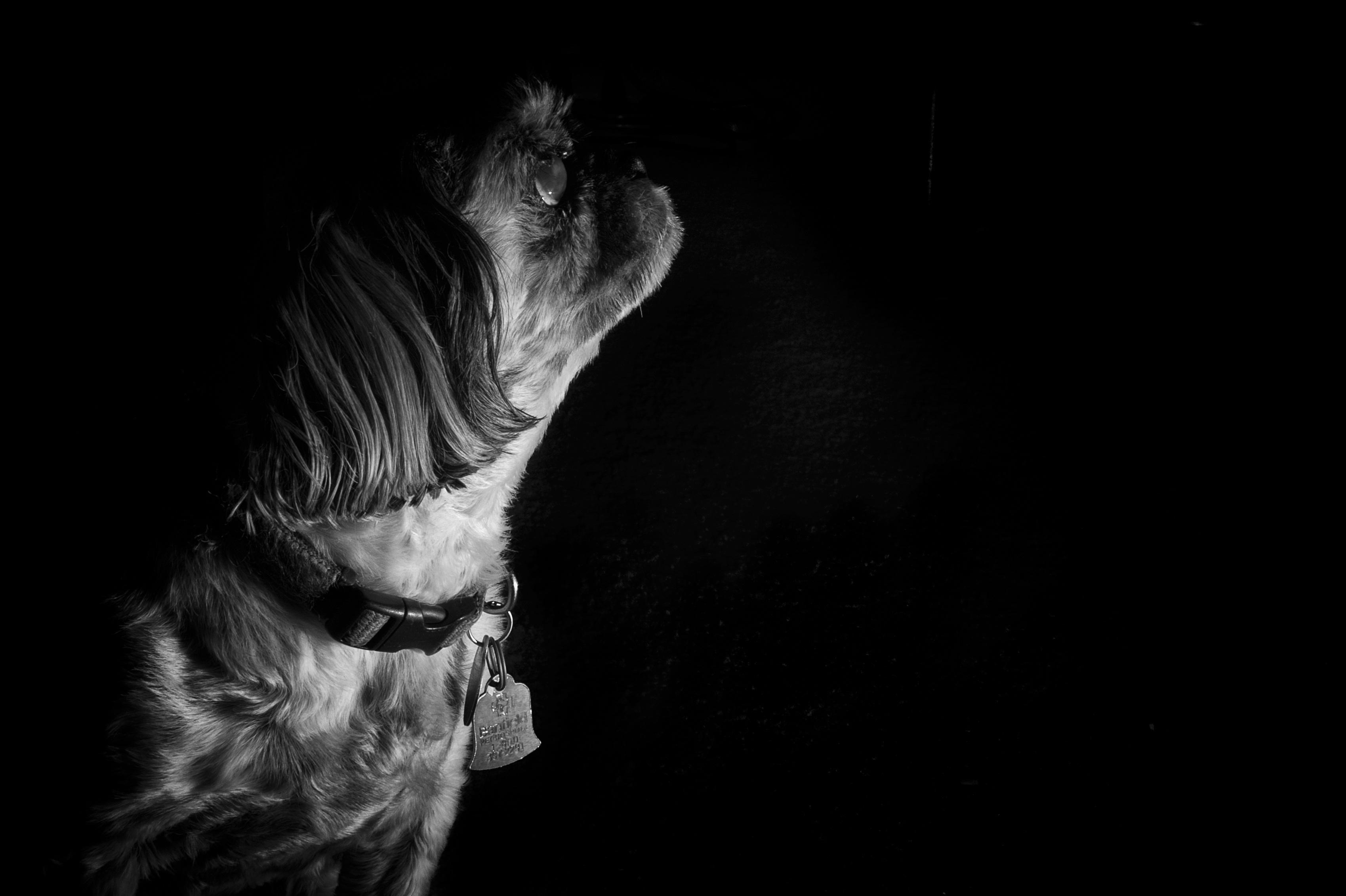 Fotos Gratis Mano Ligero En Blanco Y Negro Fotografía Perrito