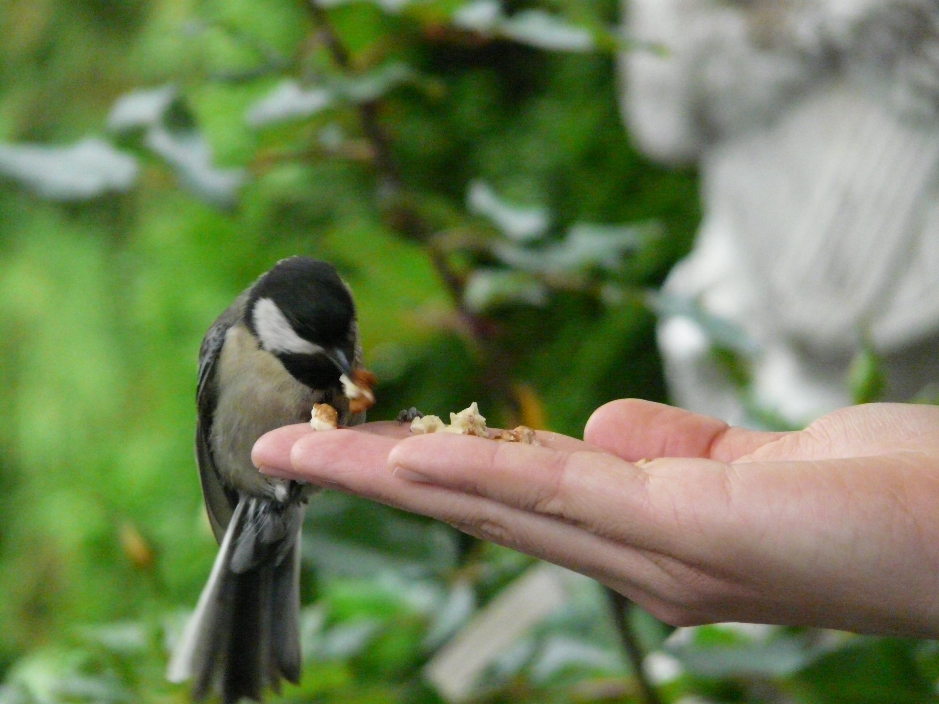 картинки как кормят птиц с руки