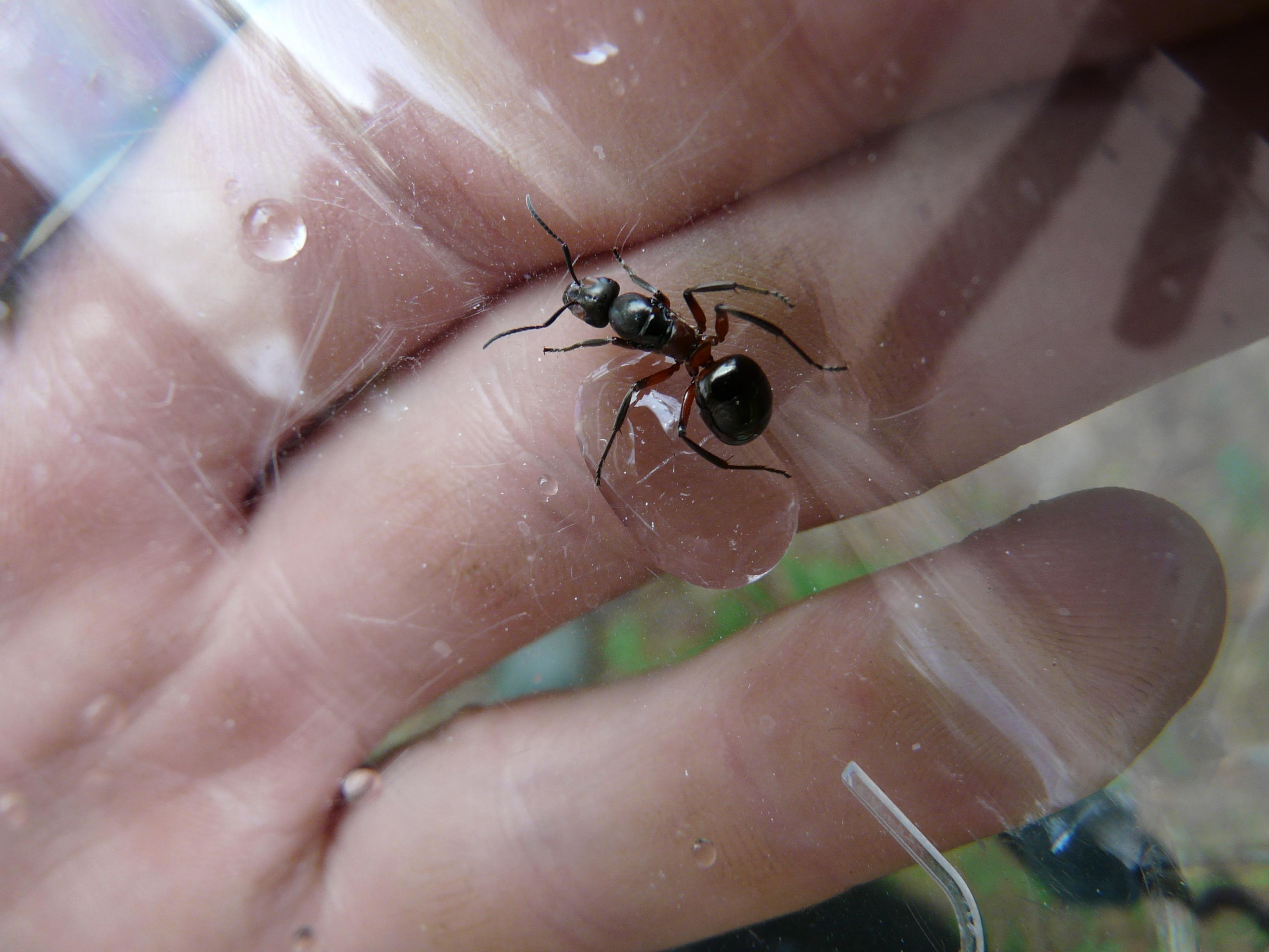 Fotos Gratis Mano Naturaleza Dedo Insecto Uña Fauna