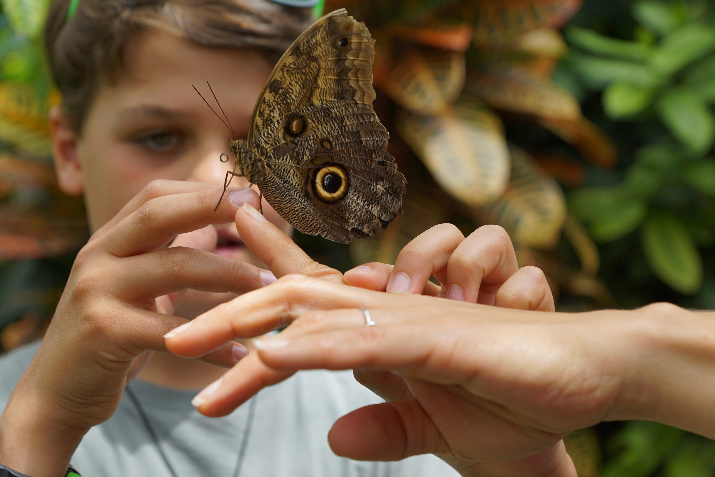Ребенок и насекомые фото