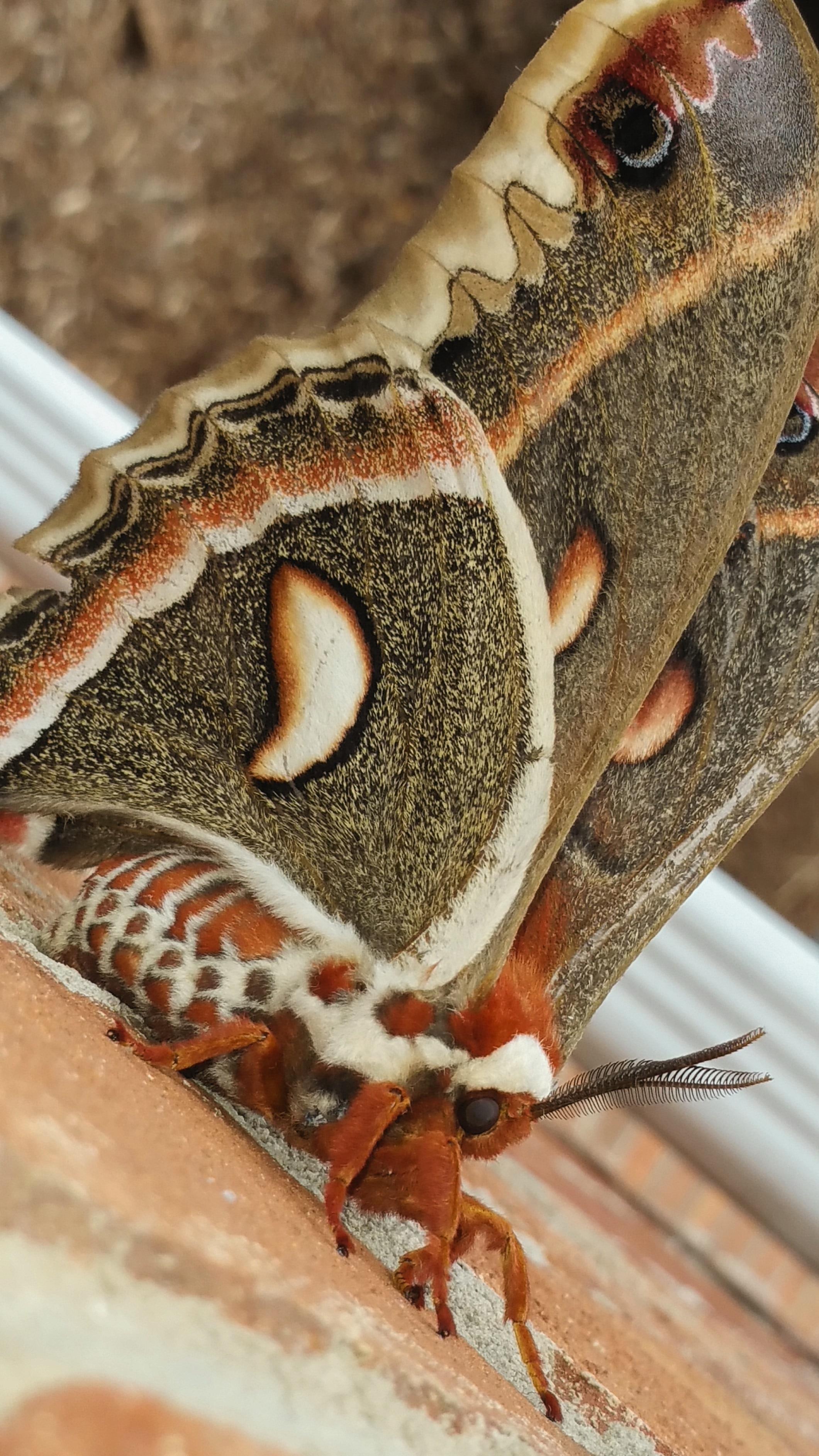 Fotos Gratis Mano Naturaleza Madera Patr N Insecto Polilla  ~ Como Son Las Polillas De La Madera