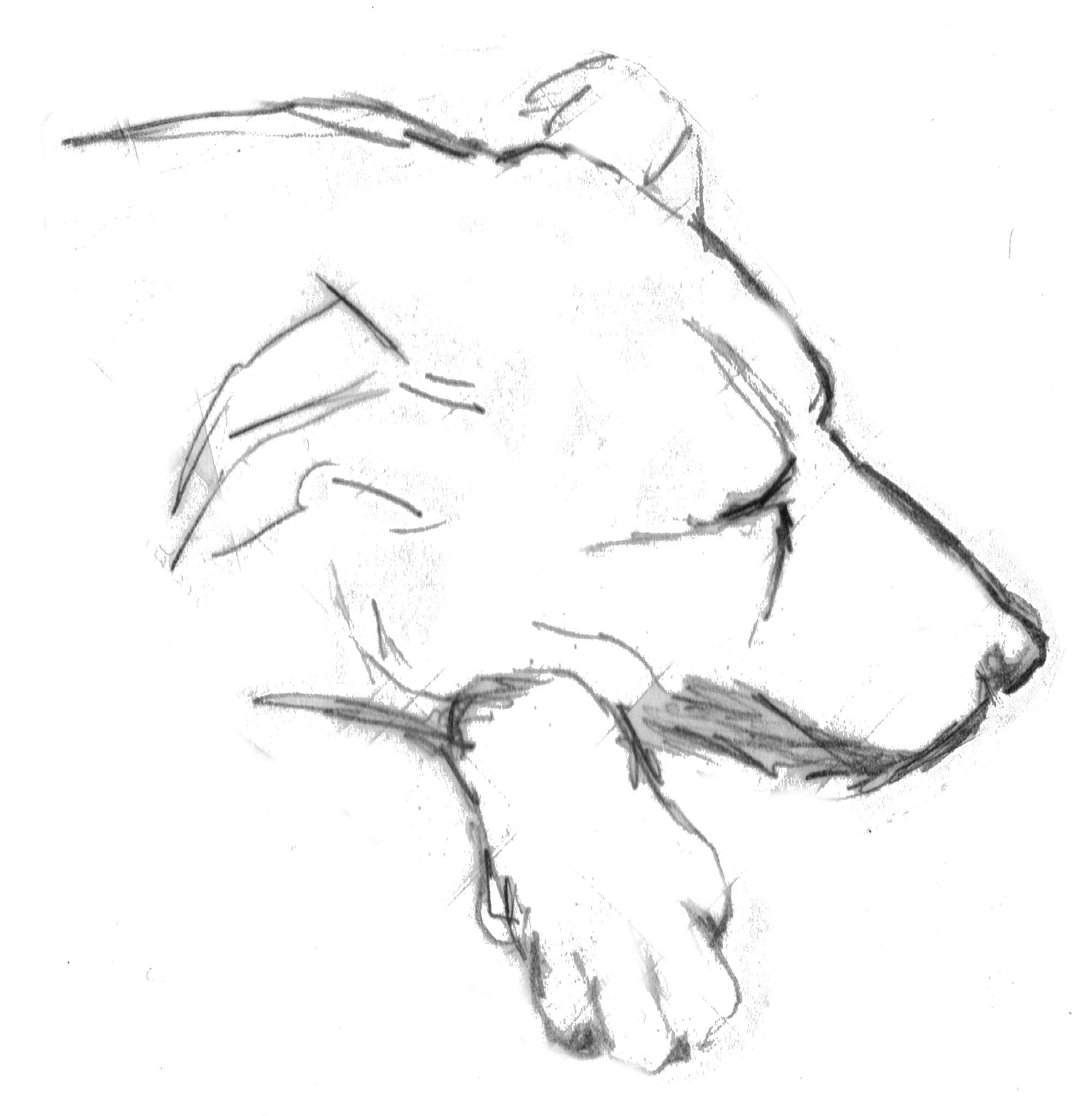 Gambar Tangan Hitam Dan Putih Hewan Membelai Satu Warna