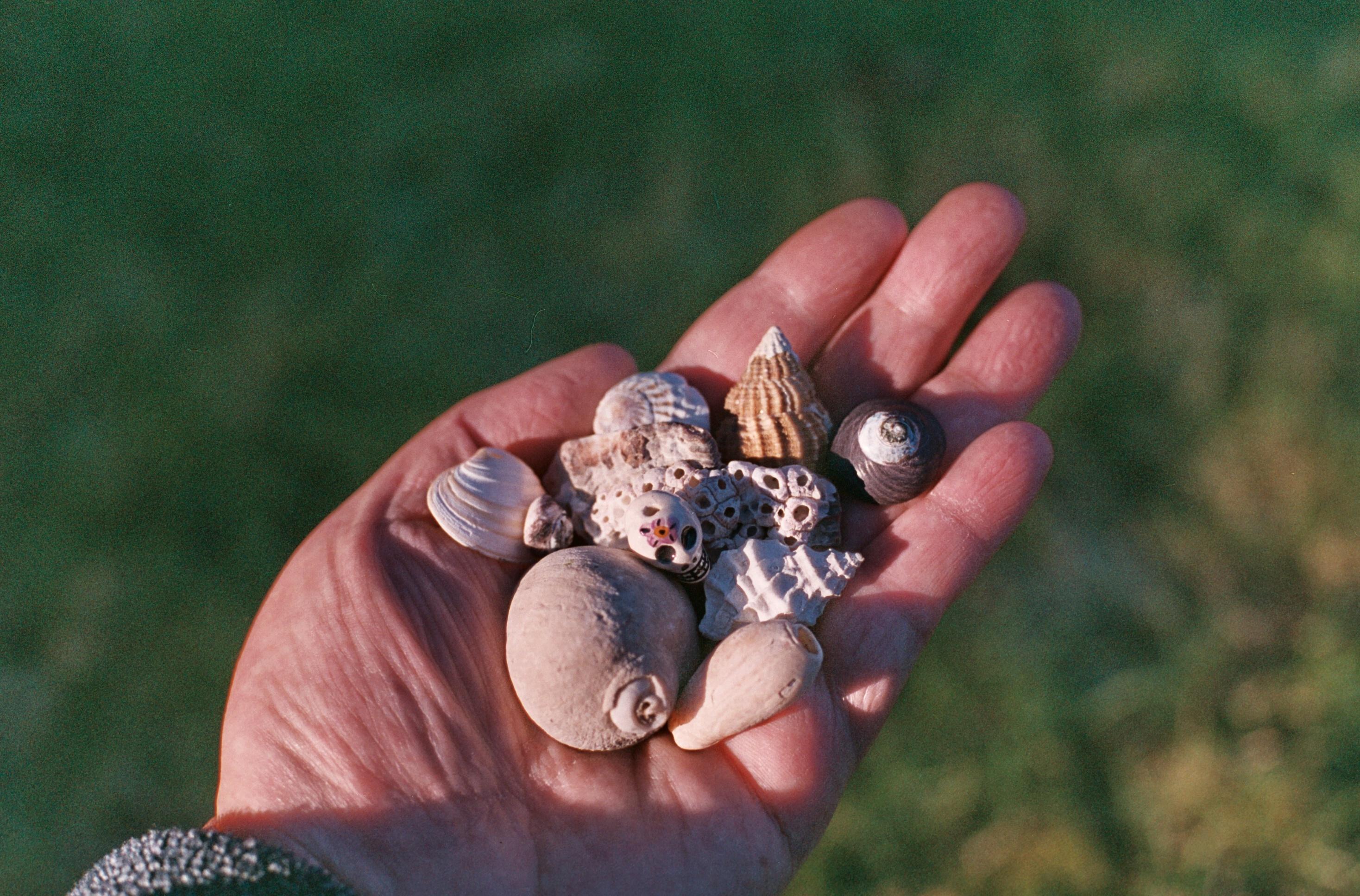 Fotos gratis : mano, fotografía, anillo, película, dedo, uña, Chile ...