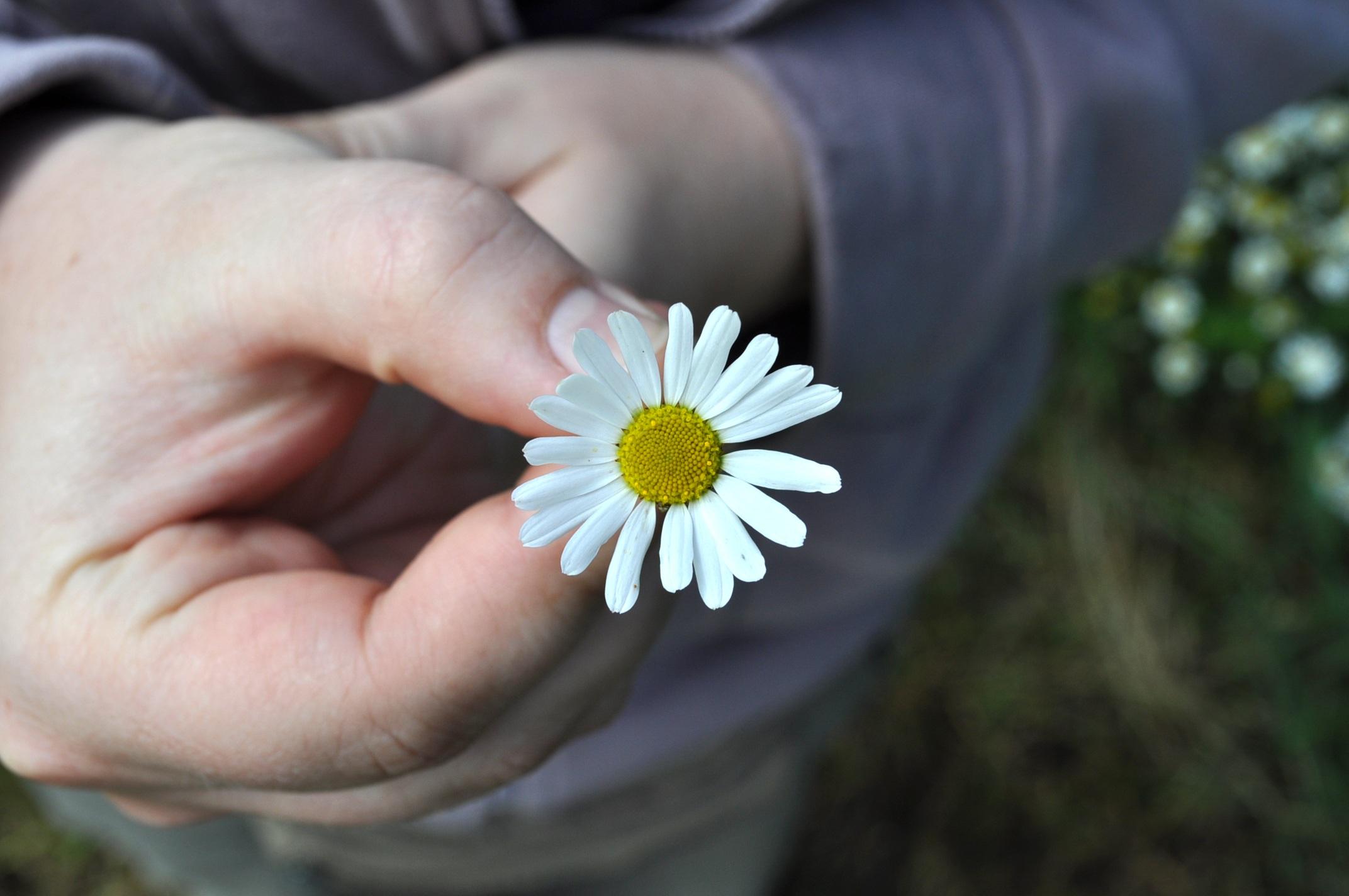 Рука дарящая цветы картинки