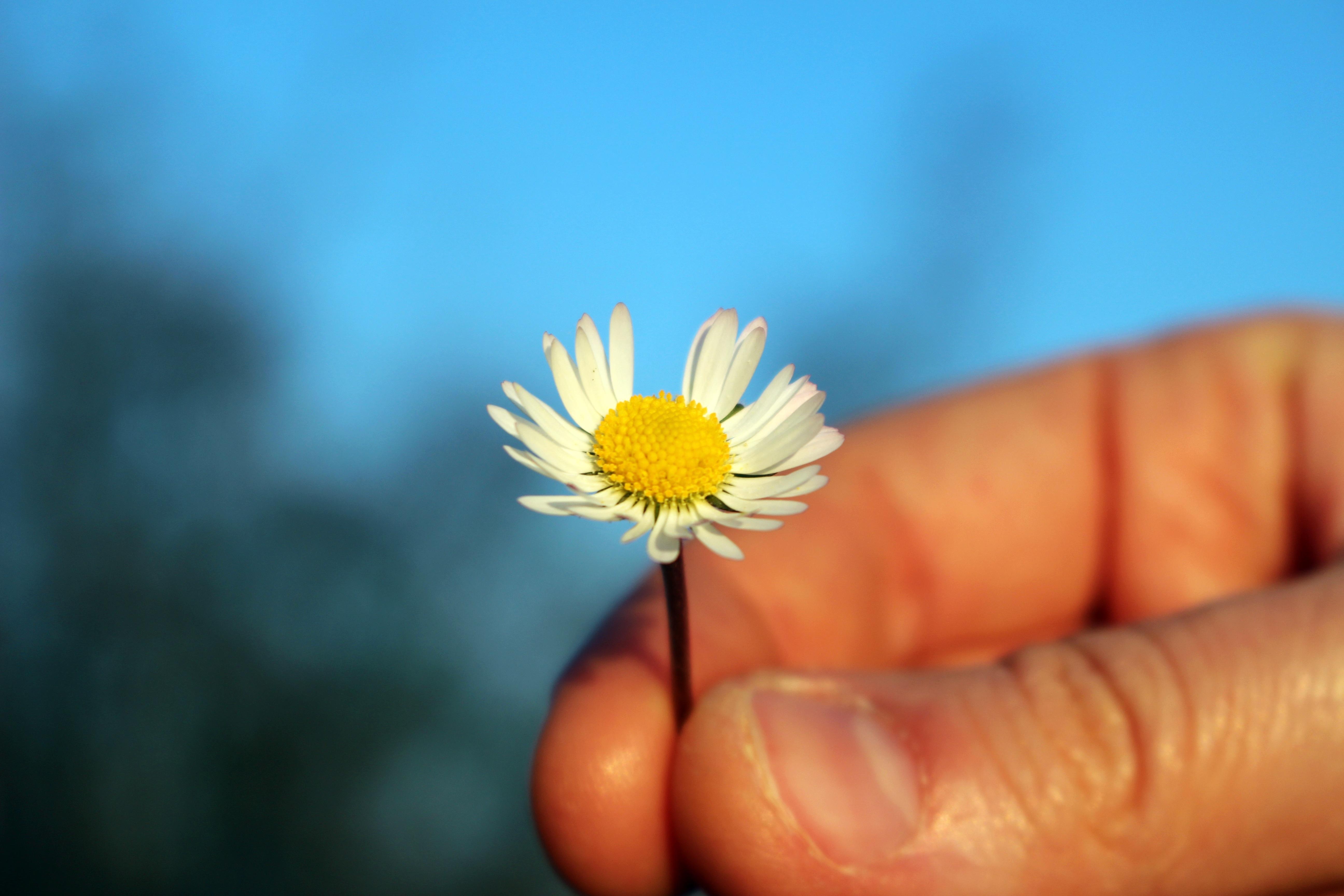 Gambar Menanam Sinar Matahari Daun Bunga Biru Kuning Flora