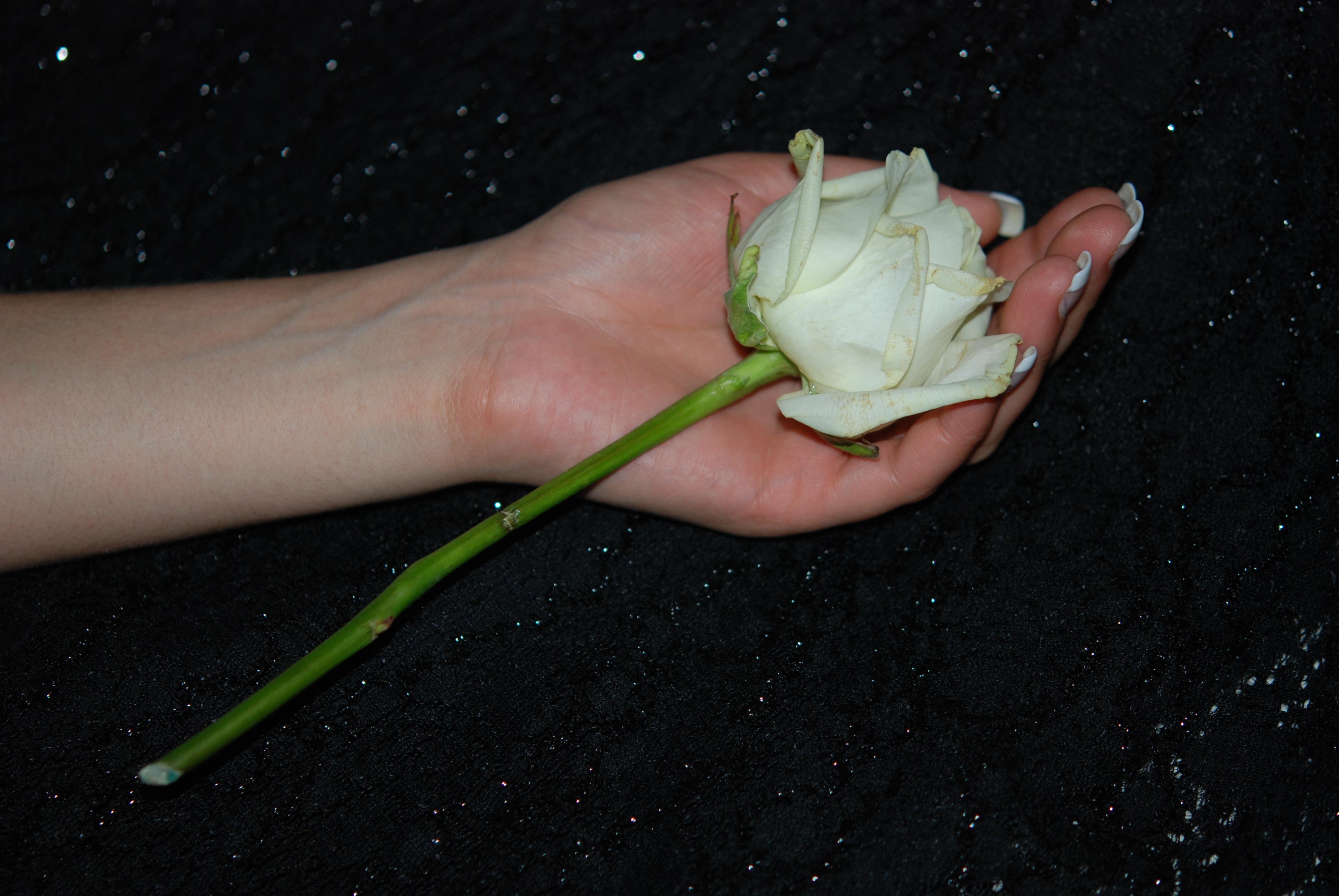 него прекрасная белые розы в ладонях фото континентальный кролик, который