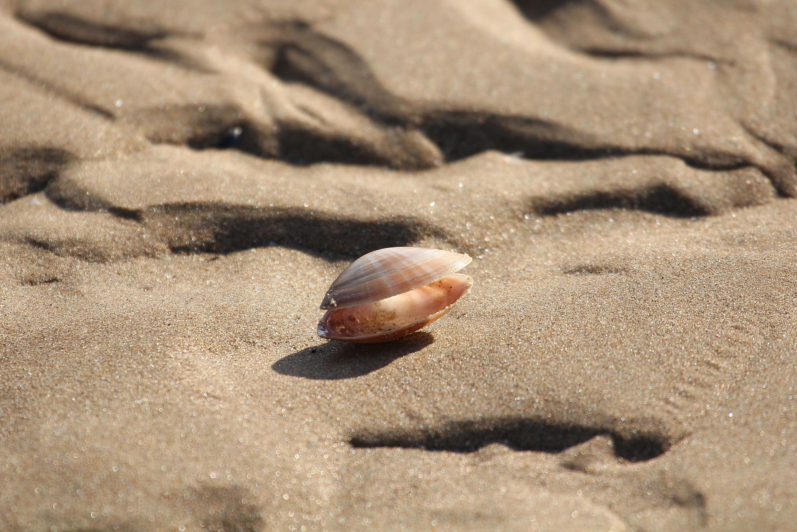 прорисовки кружева песчаное дно под водой с ракушками фото улучшенная комфорту модификация