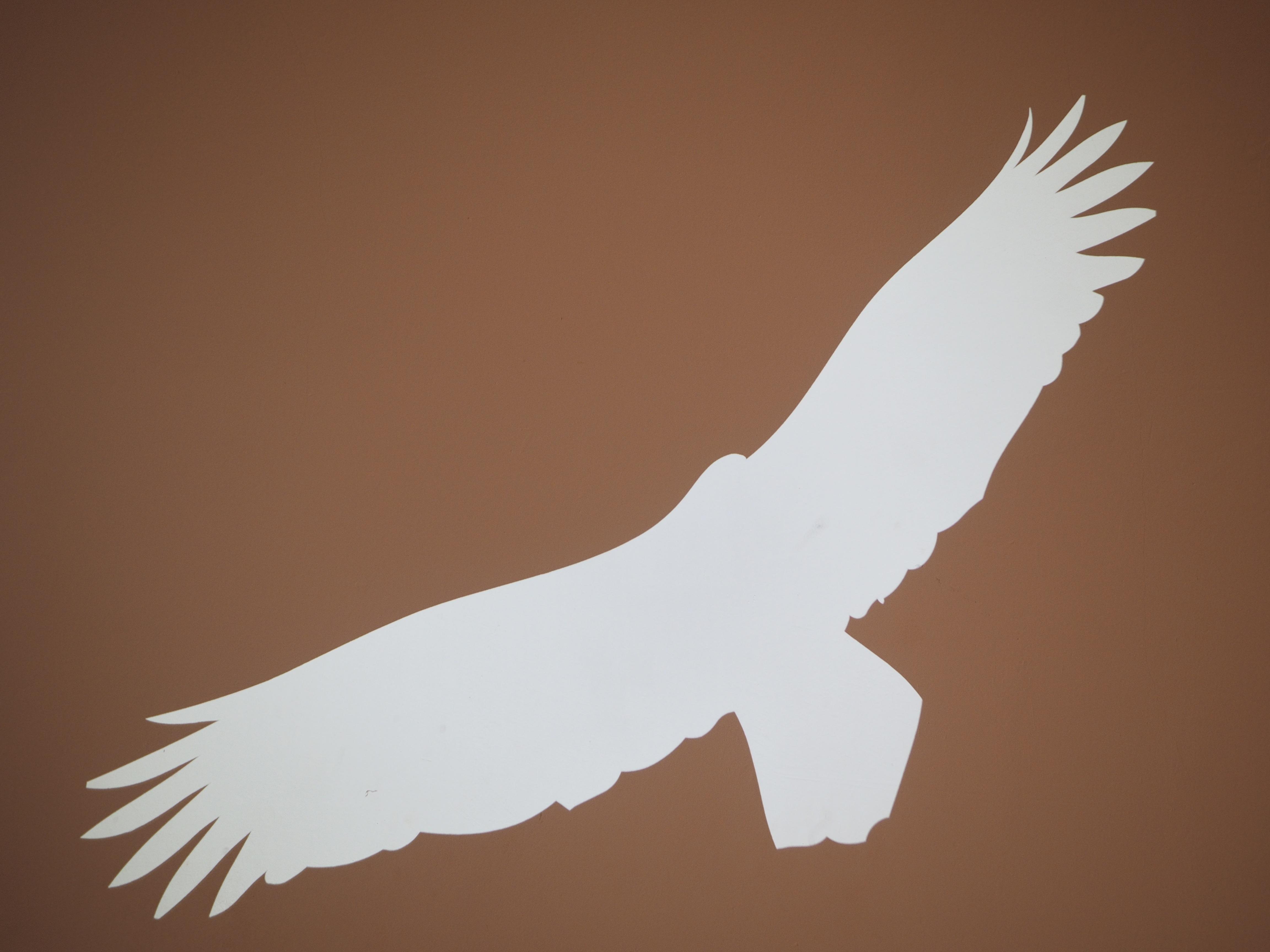 Gambar Tangan Bayangan Hitam Sayap Putih Terbang