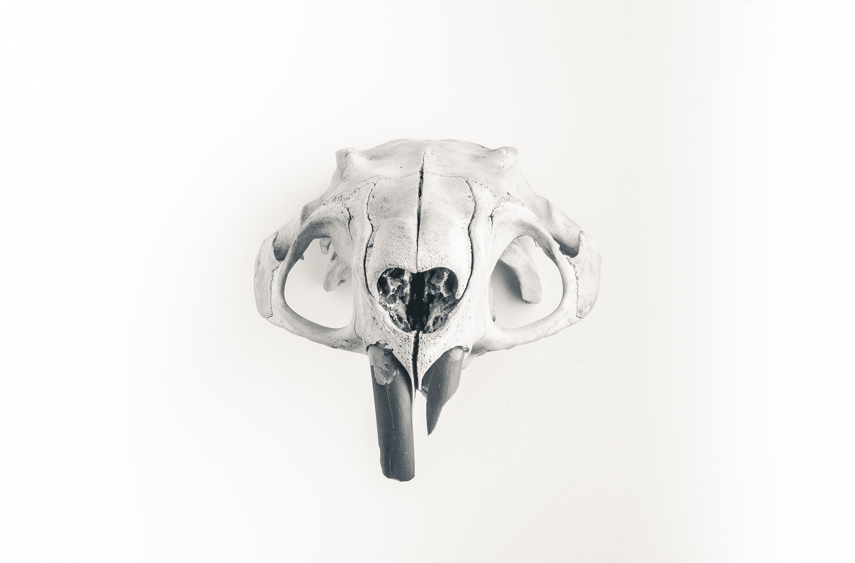 Gambar Tangan Tengkorak Produk Sketsa Gambar Kepala Organ